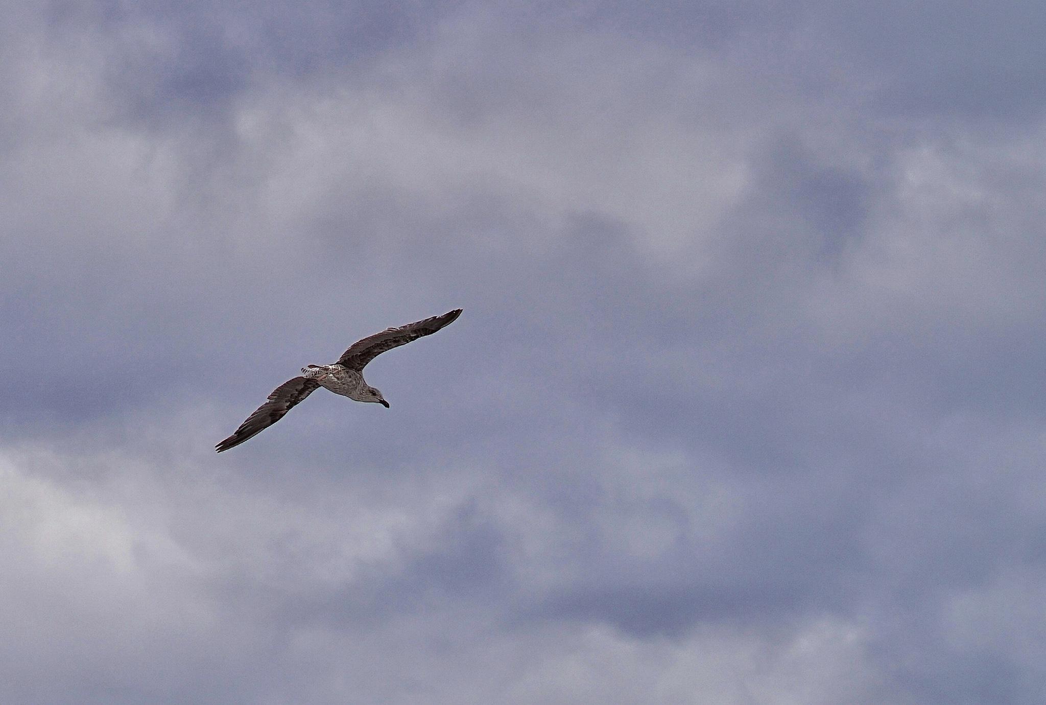 vuelo by Jeka Henriquez