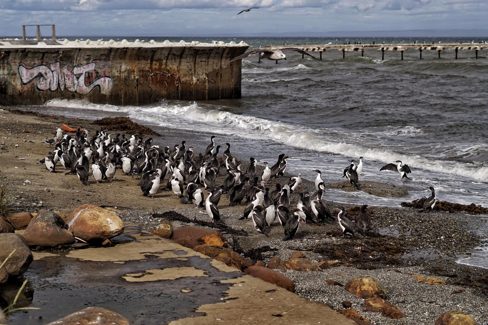 Estrecho de Magallanes,  Punta Arenas  by Jeka Henriquez
