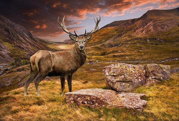 Photo in Animal #deer