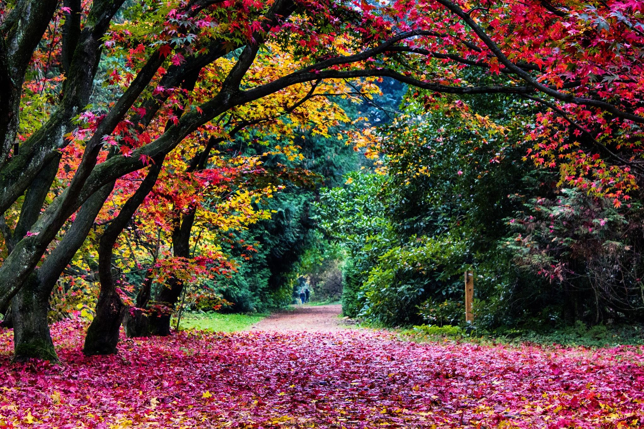 jesień w arboretum by Public Transport Photography