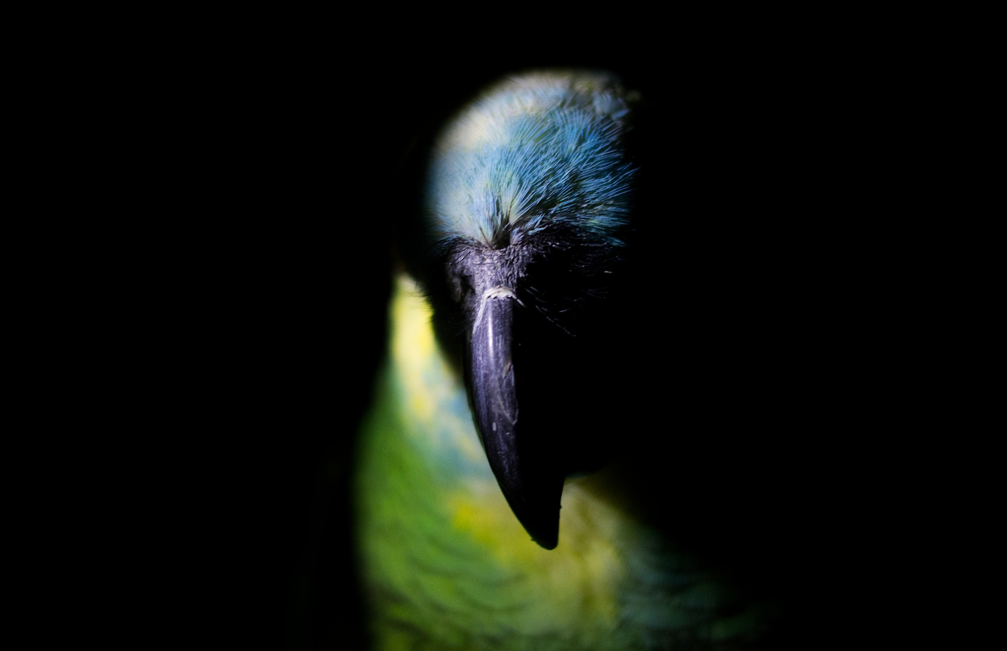 Colorful parrot. by Janis Straut