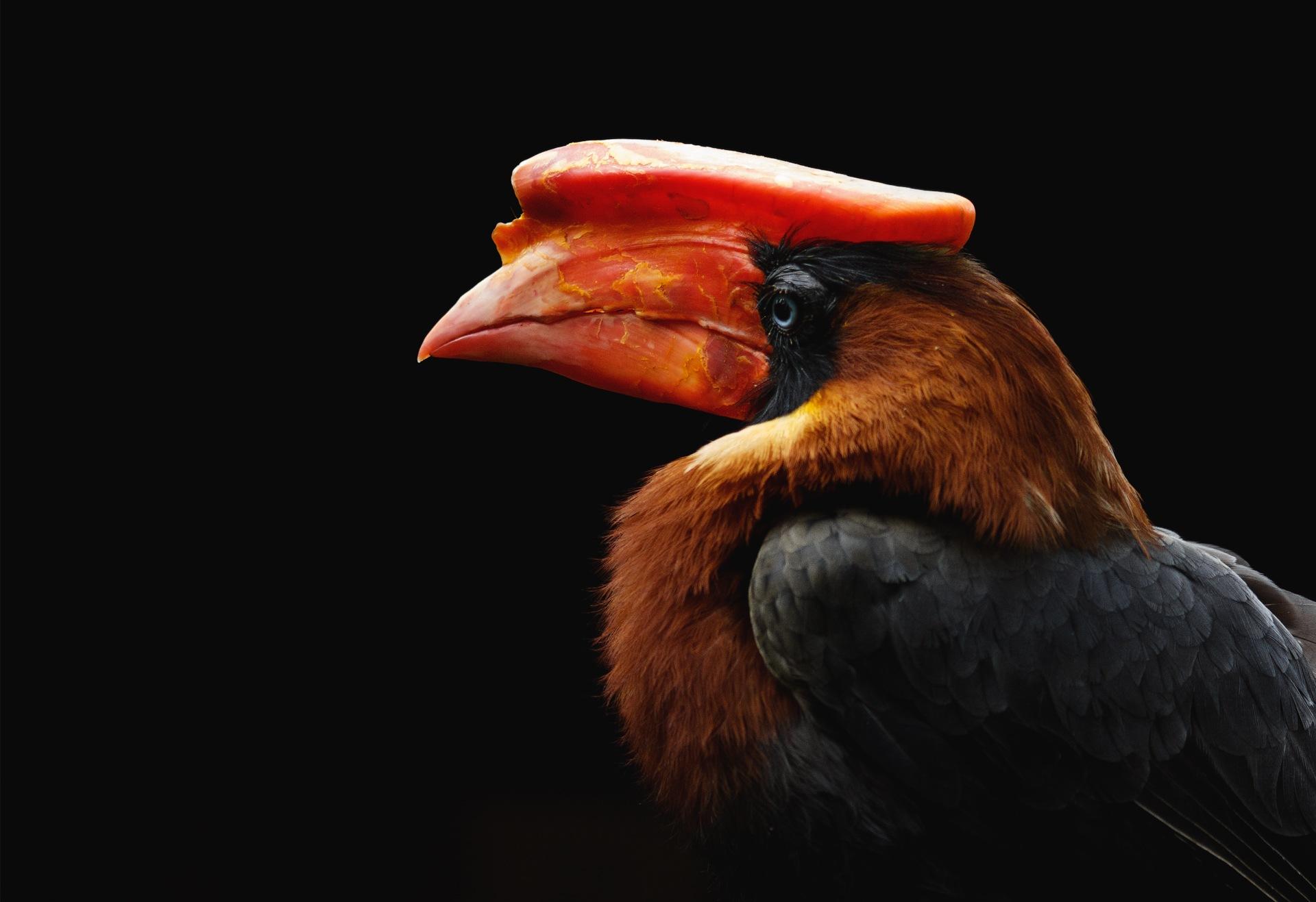Red beak by Janis Straut
