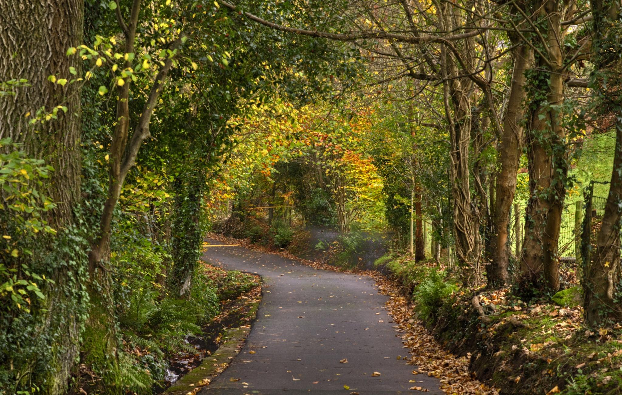 Country Lane by Delwyn Edwards