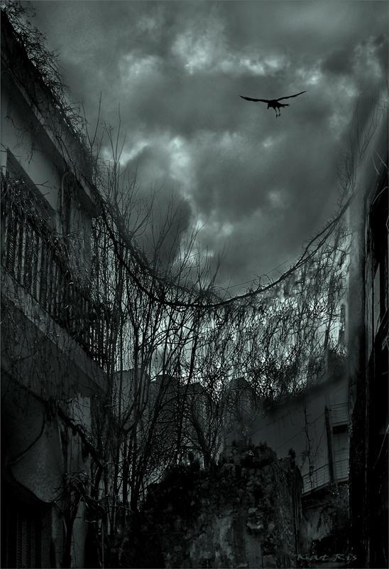 the crow by Katerina Risaki