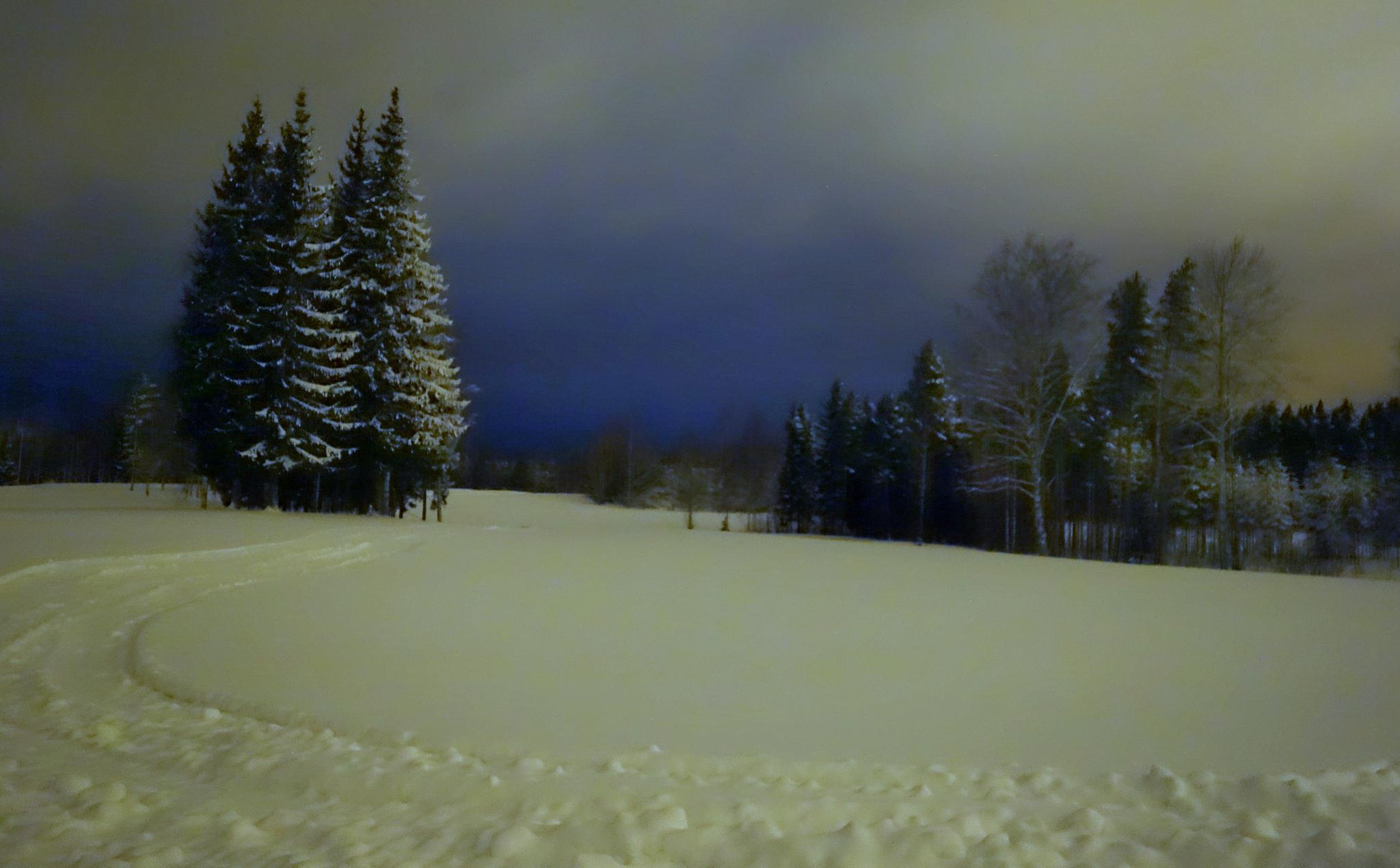 Fir spruces at night. by Hannu Pulkkinen