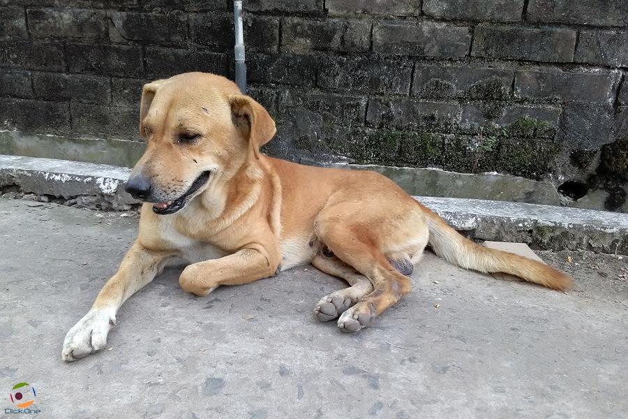 Dog. by Ăjȫy Ðhâŕ
