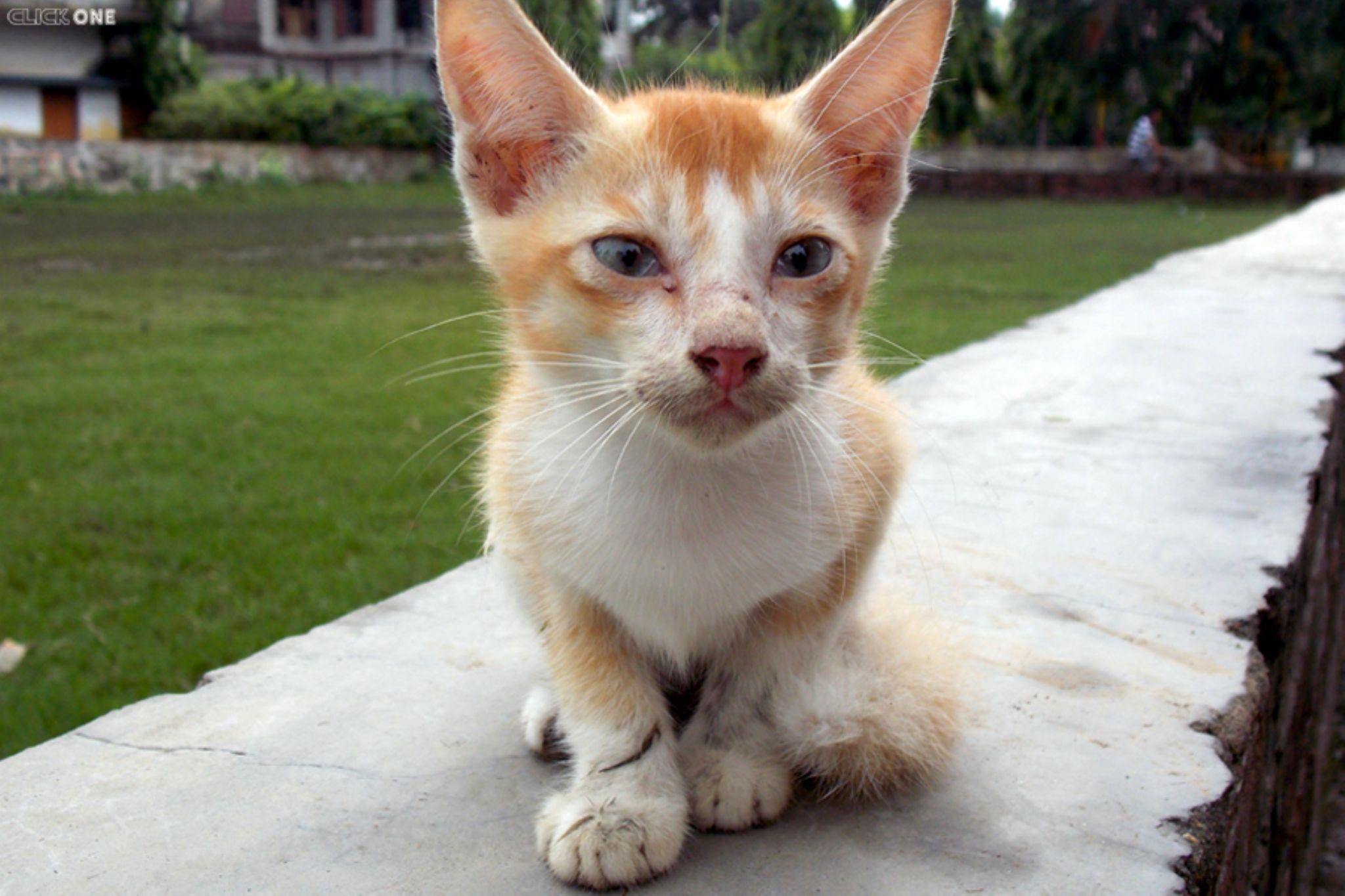 Cat by Ăjȫy Ðhâŕ