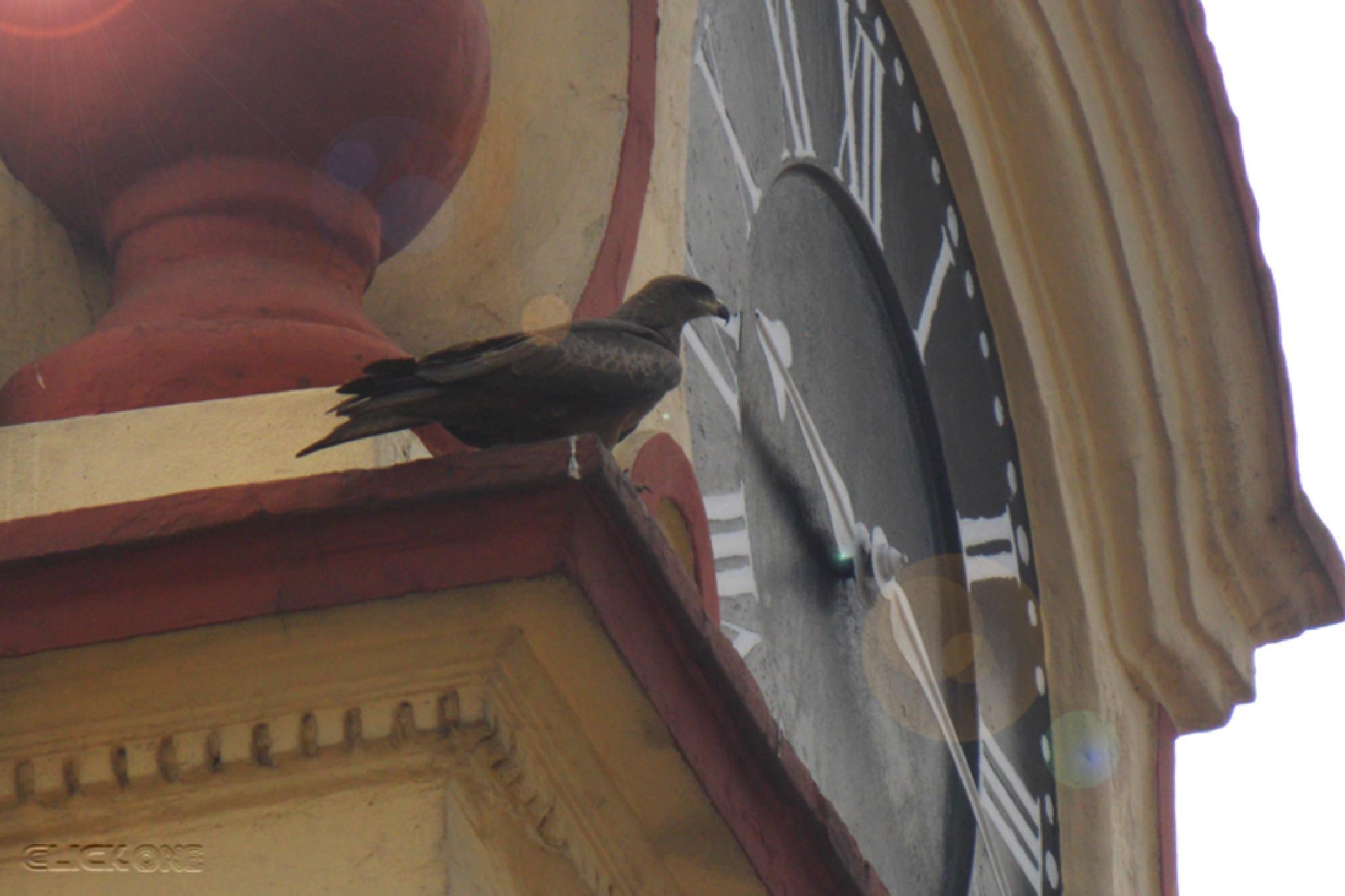 Bird by Ăjȫy Ðhâŕ