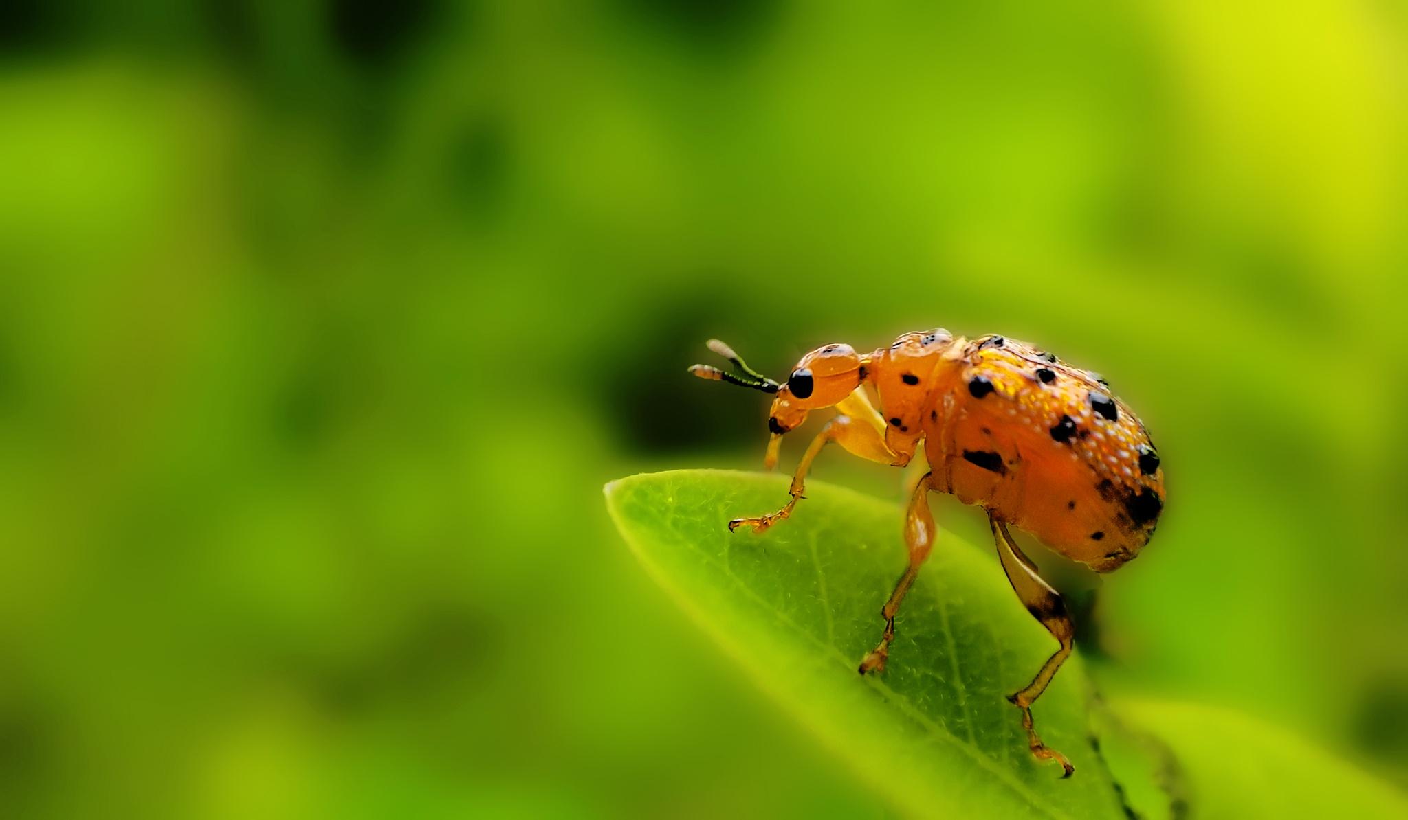 Bug by Monowar