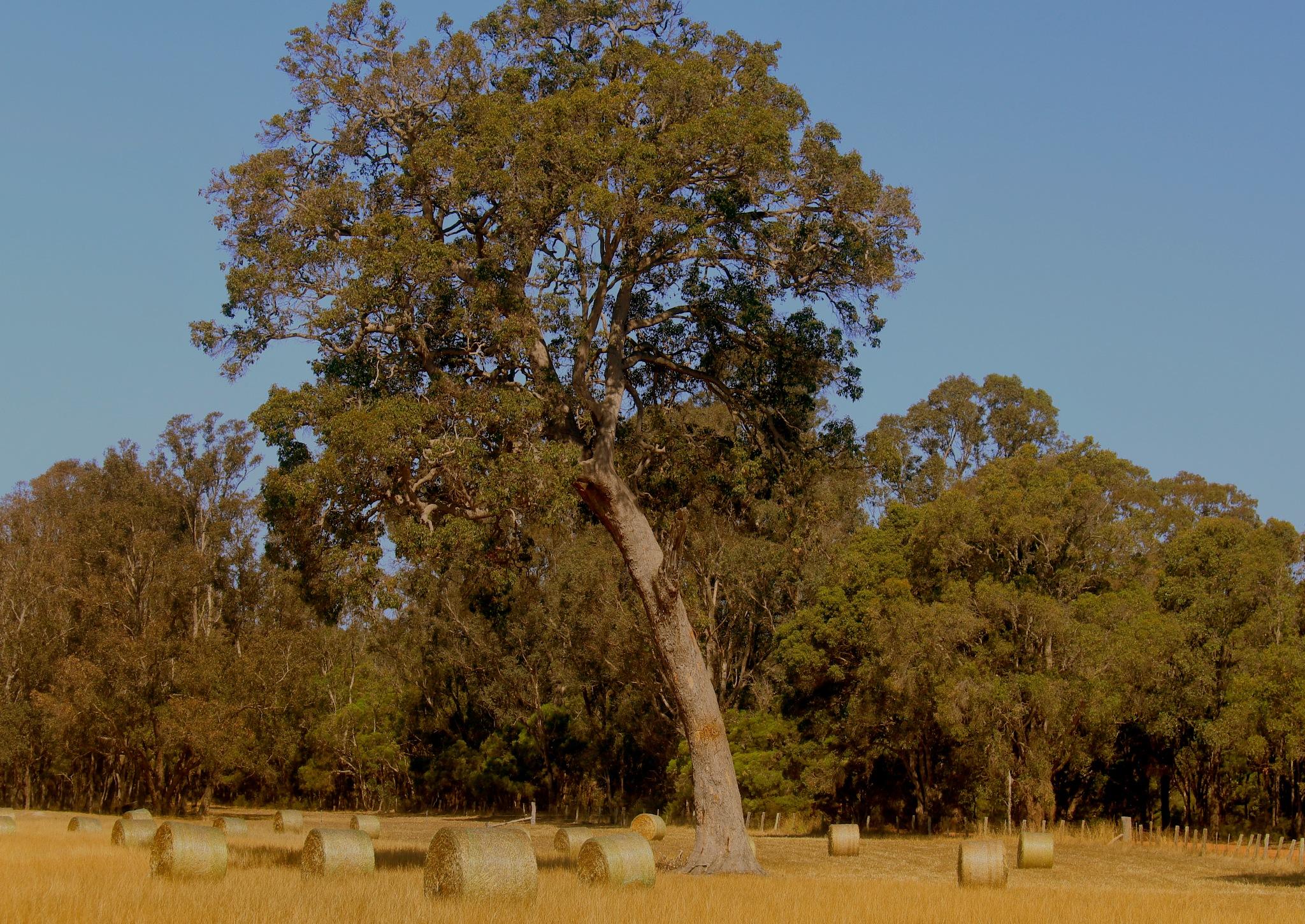Photo in Rural #rural #farm #trees
