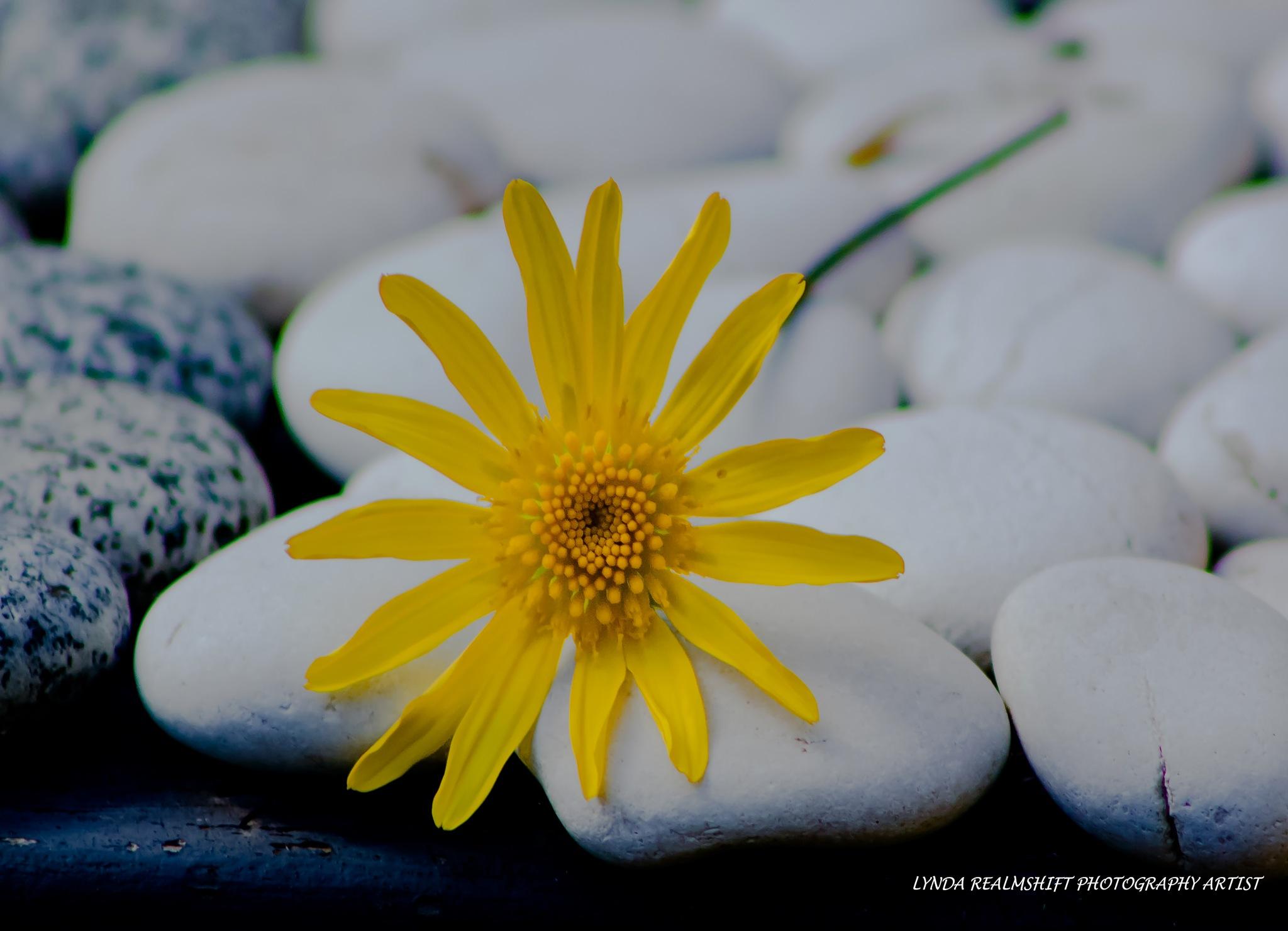 Good Morning Sunshine's by LyndaRealmshift