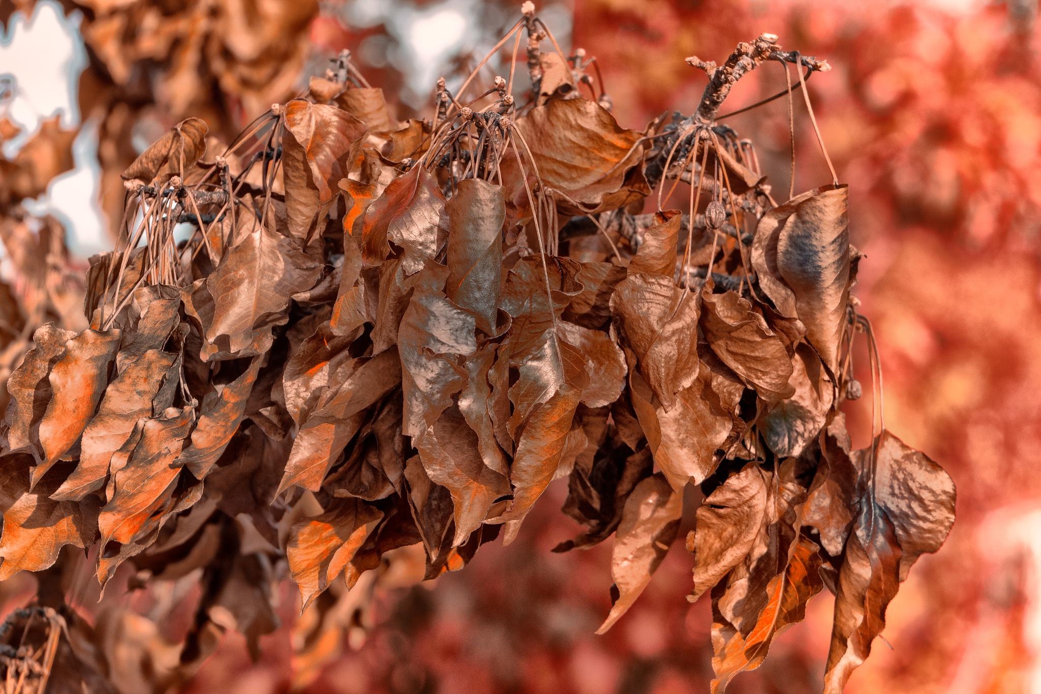 Autumn by LyndaRealmshift