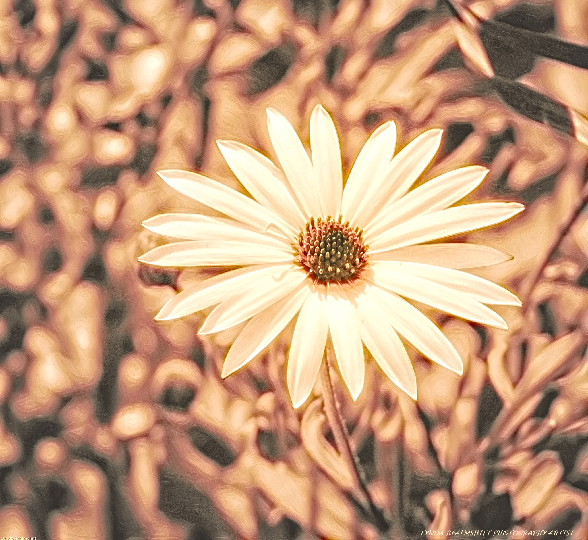 Daisy by LyndaRealmshift