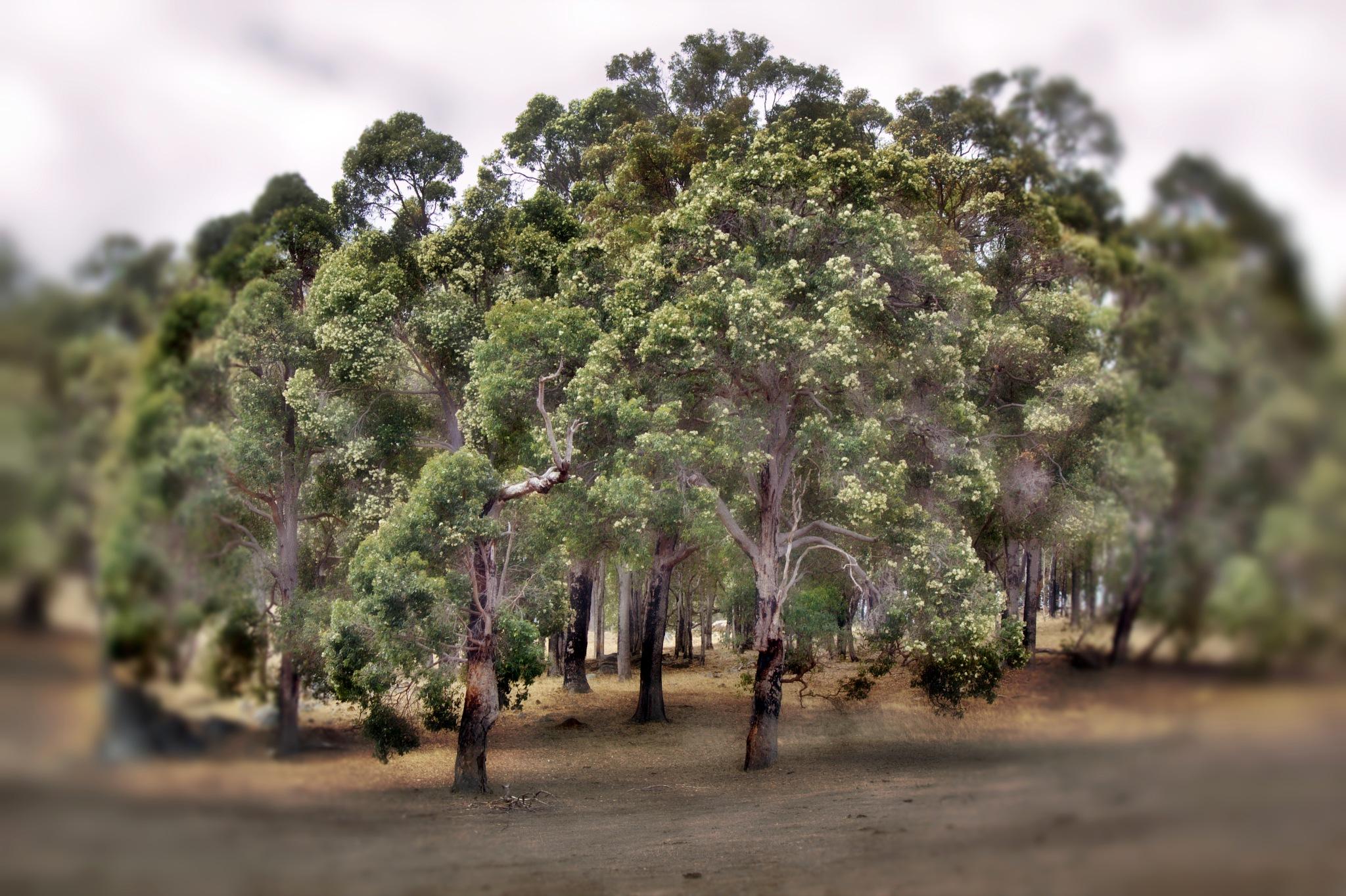Marri Tree... Marry me honey by LyndaRealmshift