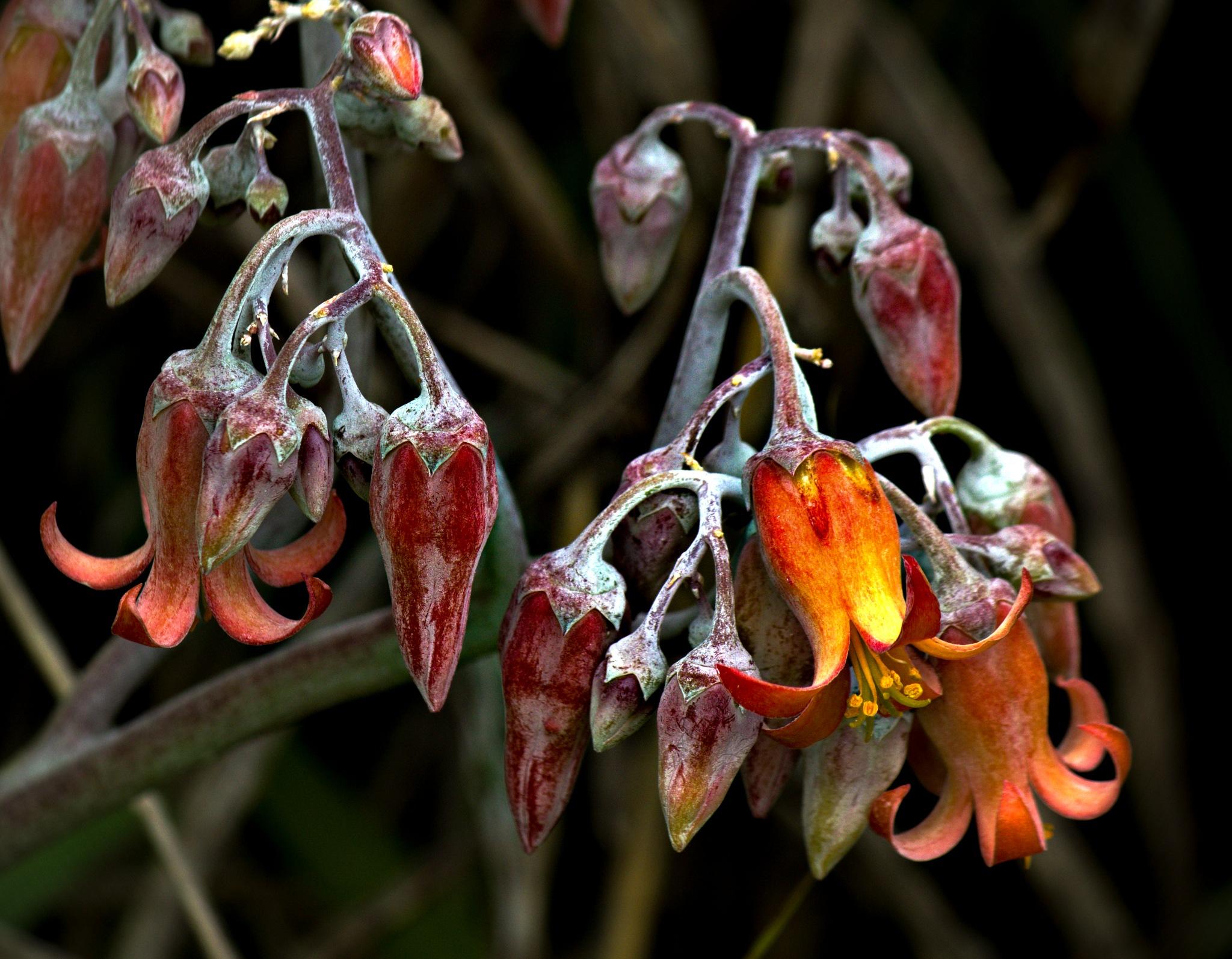 Wax Flower by LyndaRealmshift