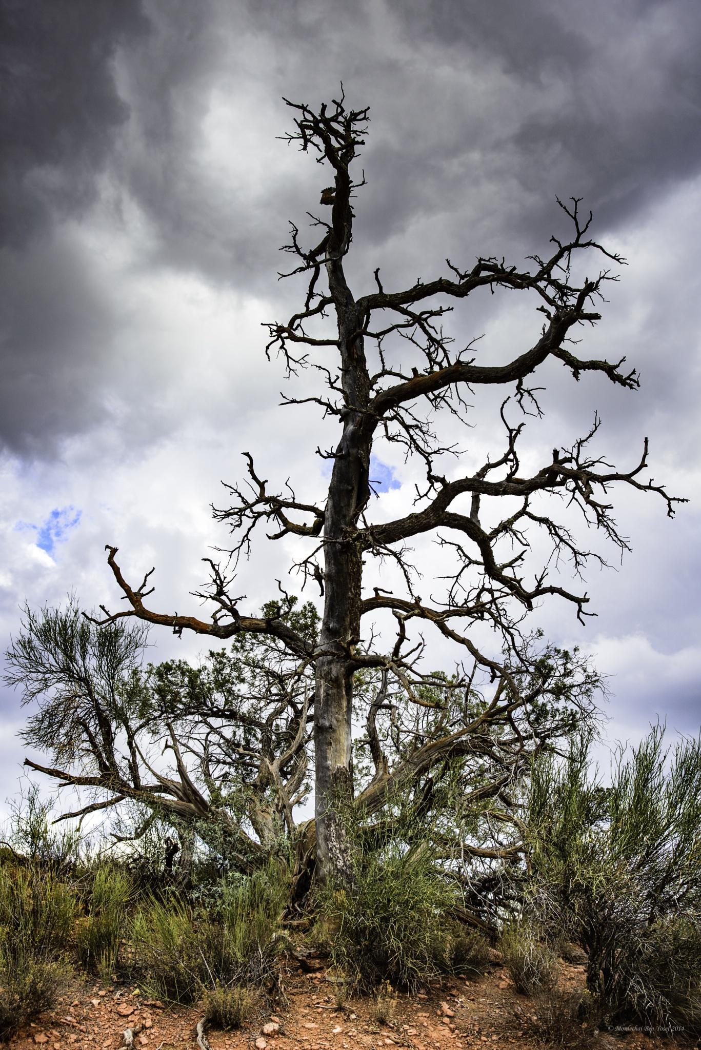 Sedona Arizona by Mordechai Ben Yosef