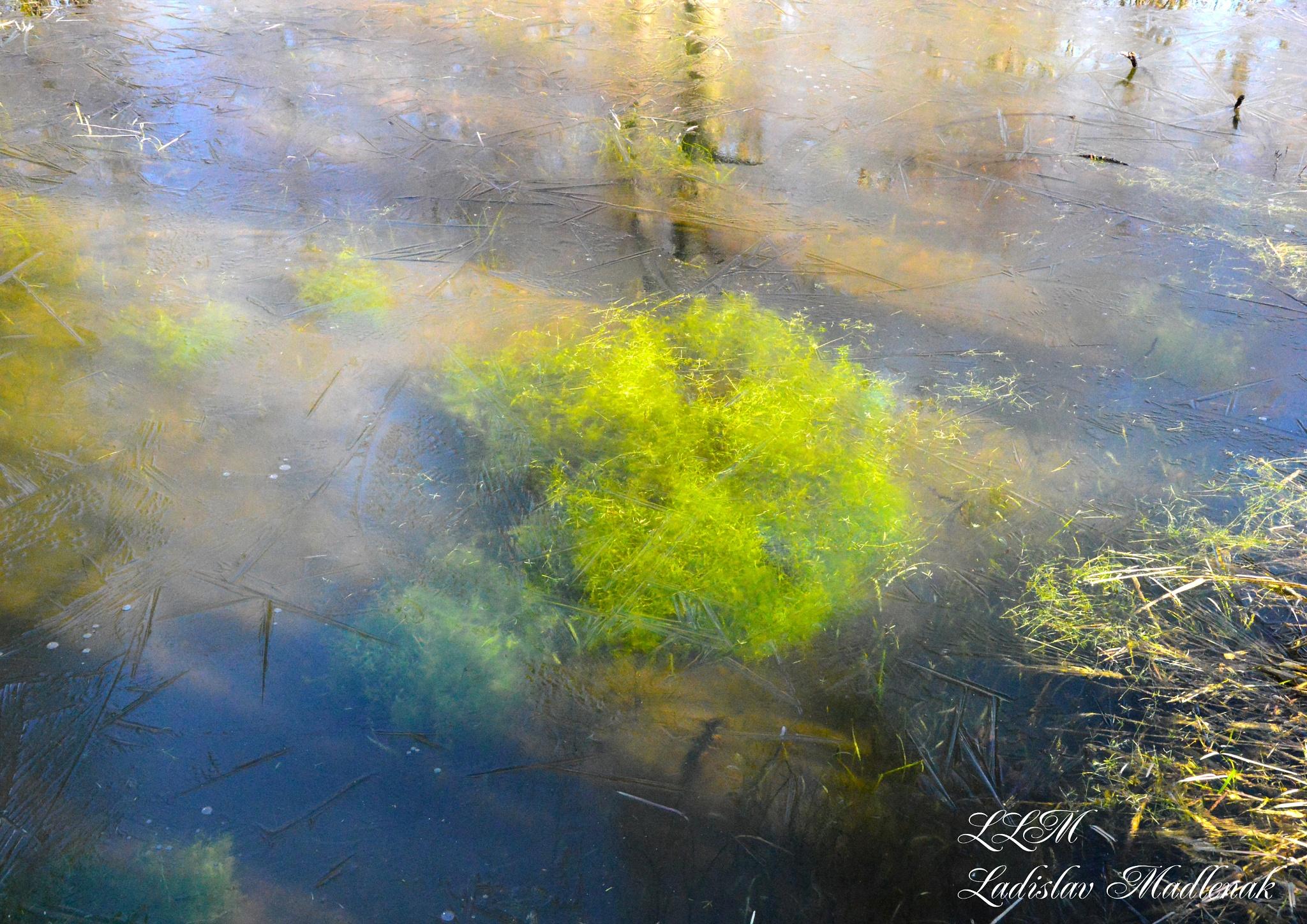 Frozen green by LLadislav Madlenak