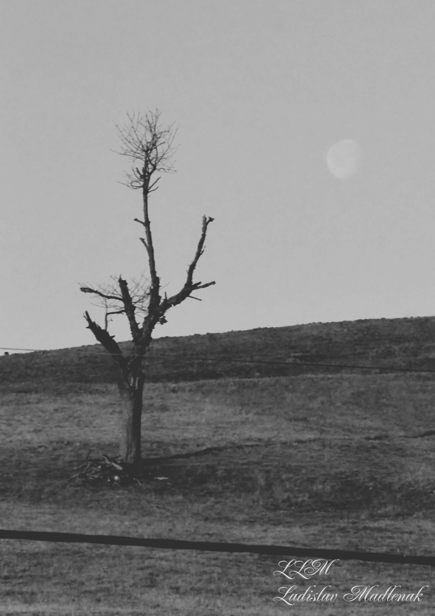 Tree and moon as seen from the window by LLadislav Madlenak