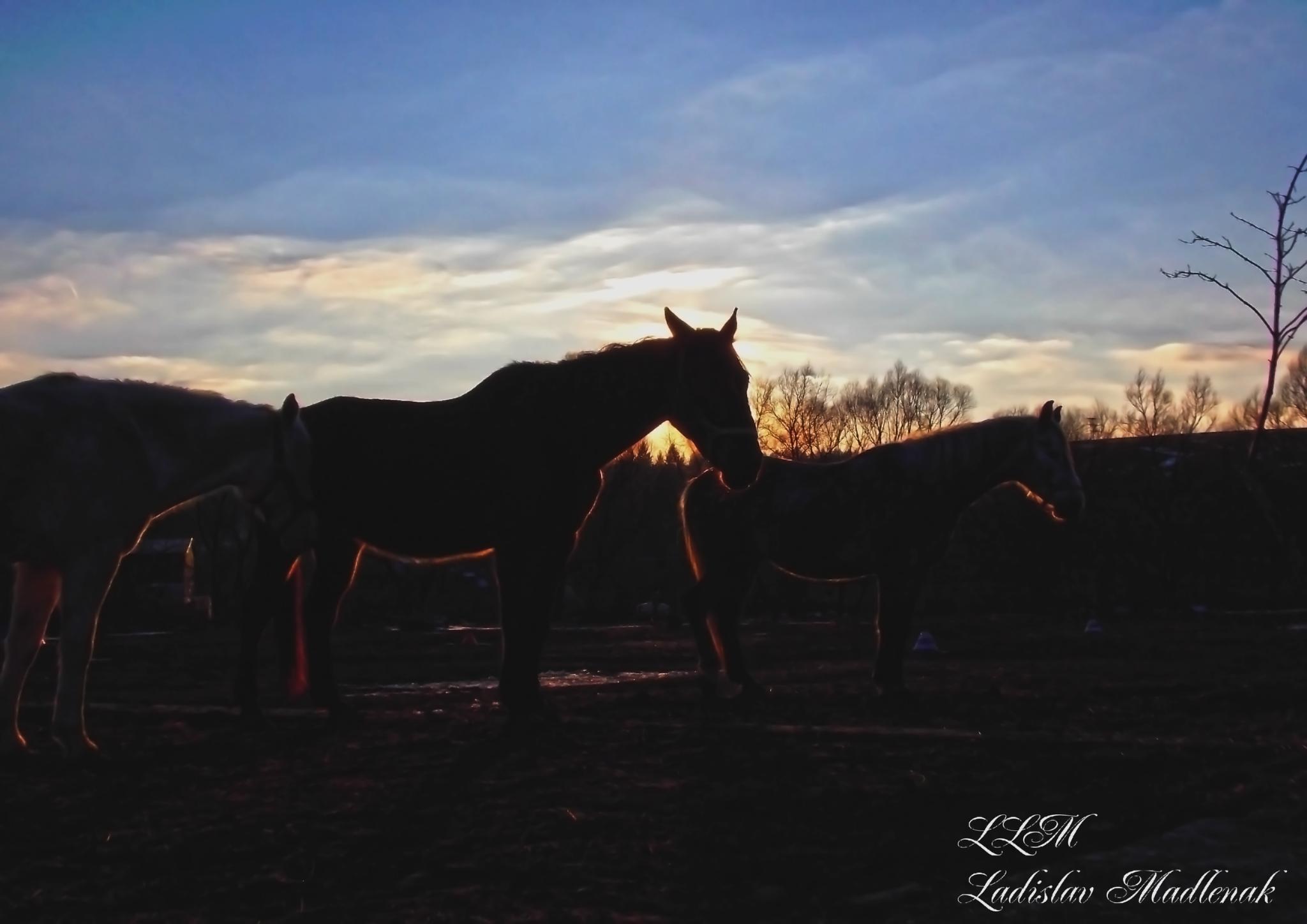 Sunset and horses by LLadislav Madlenak