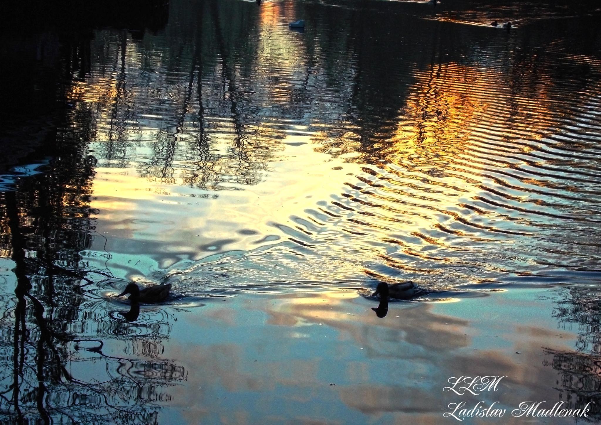 Reflection by LLadislav Madlenak