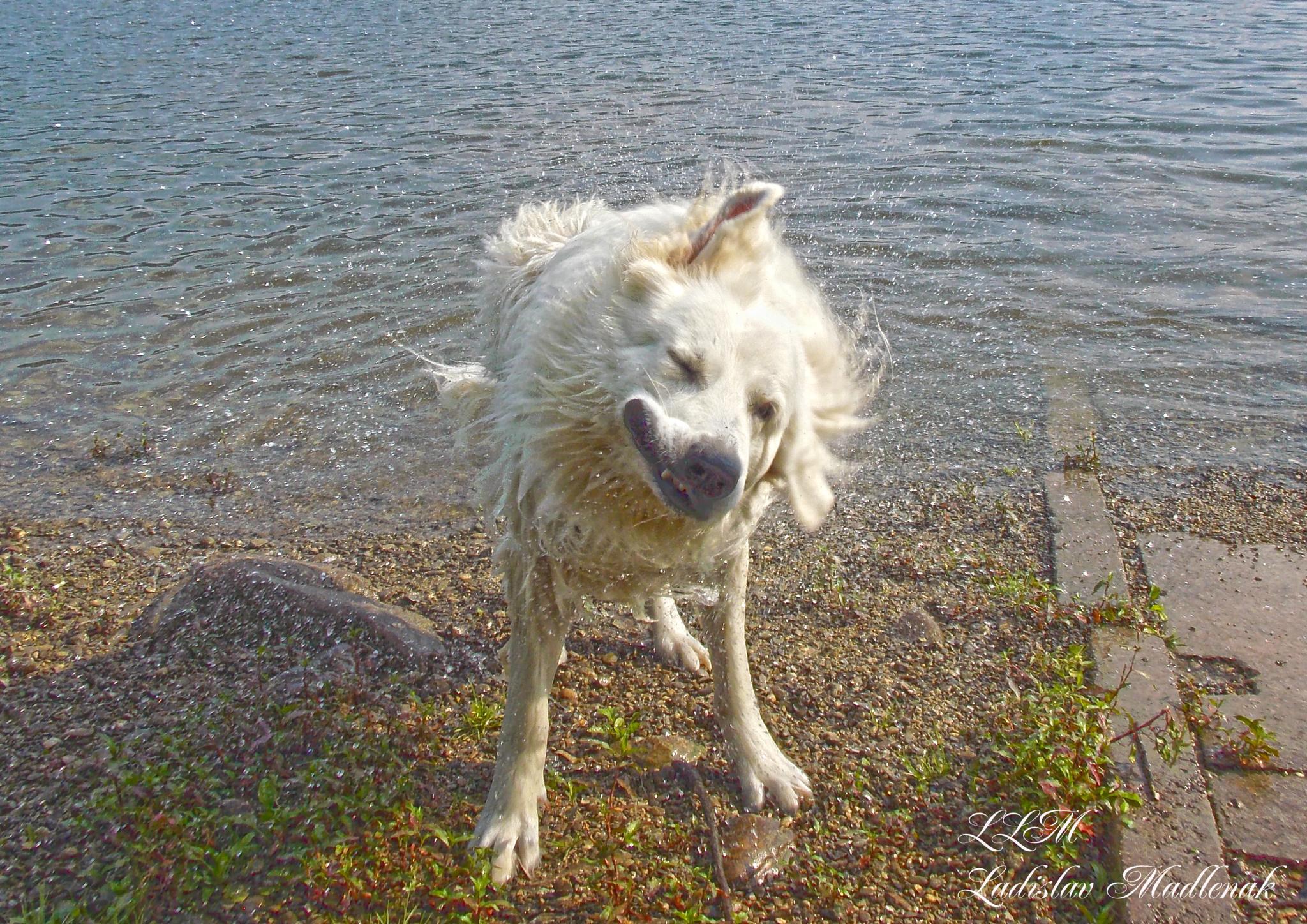 Dog after running around in the water by LLadislav Madlenak
