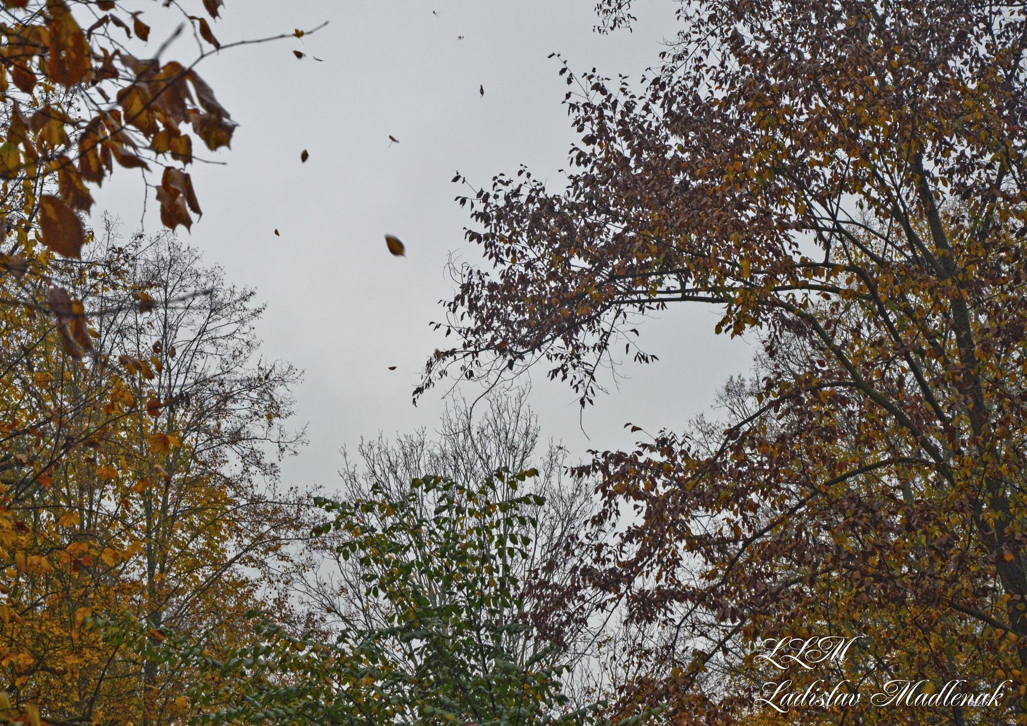 Autumn and flying foliage by LLadislav Madlenak