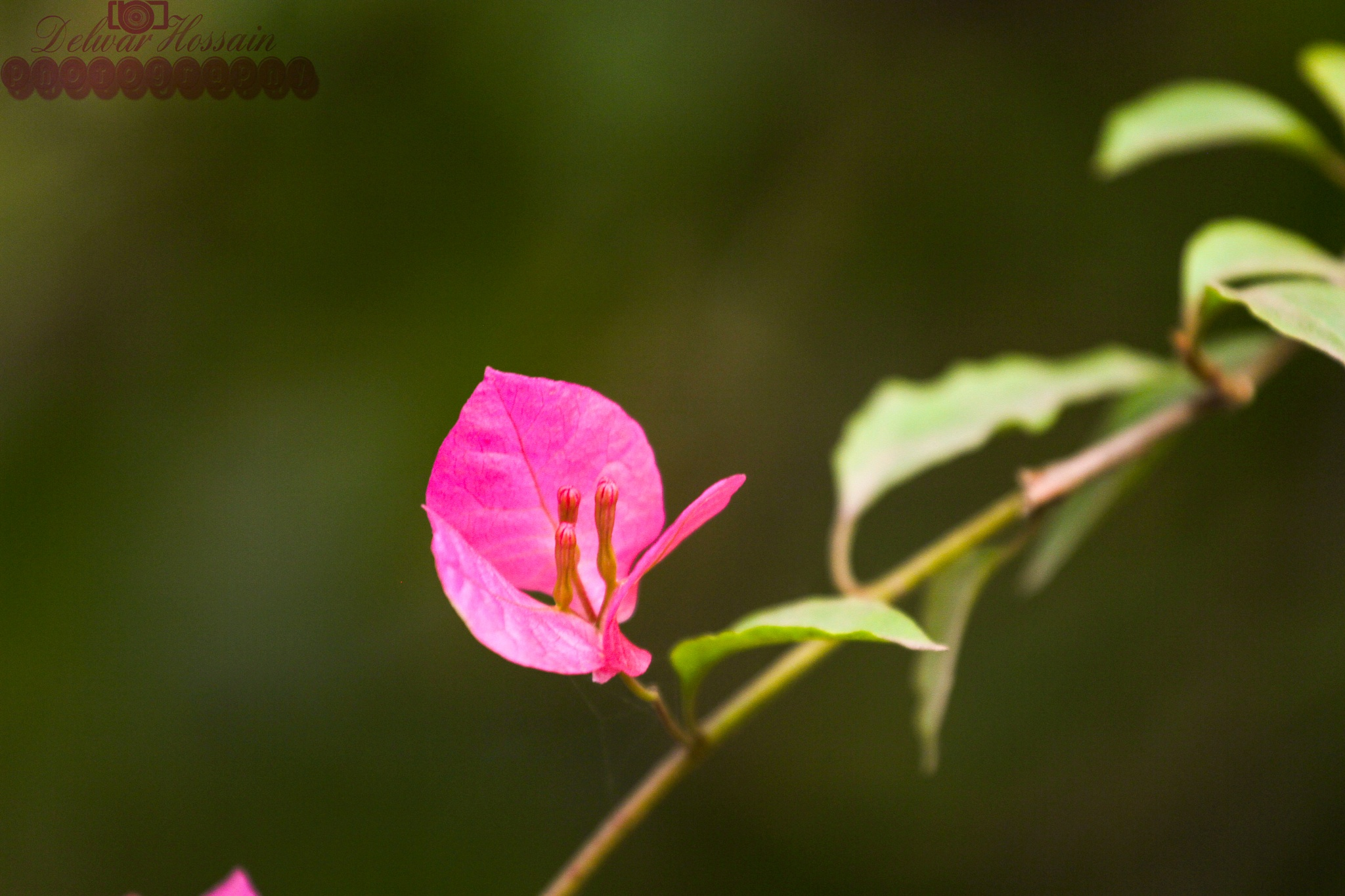 Tree leaves  by Delwar Hossain