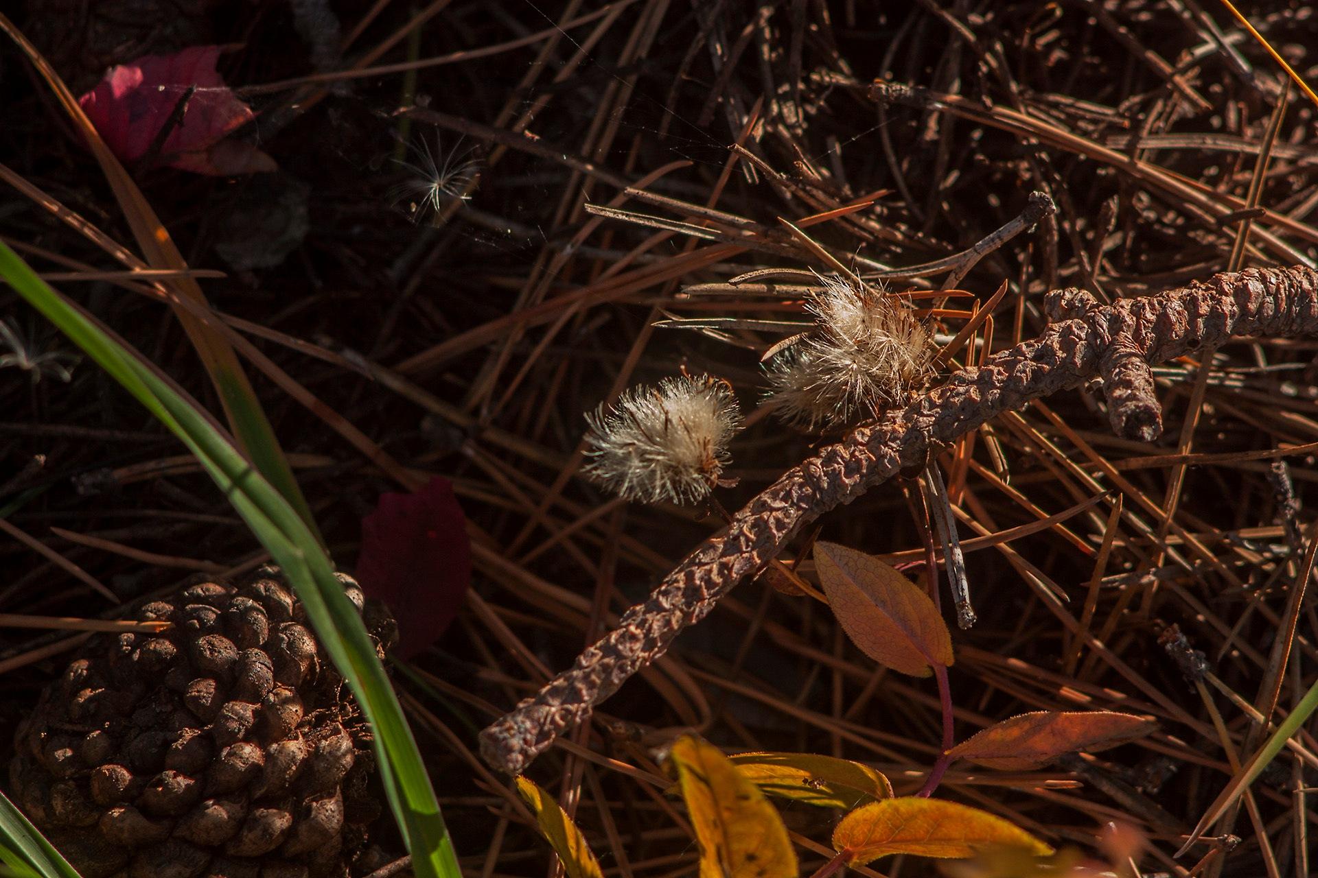 Forest still life by egorsha