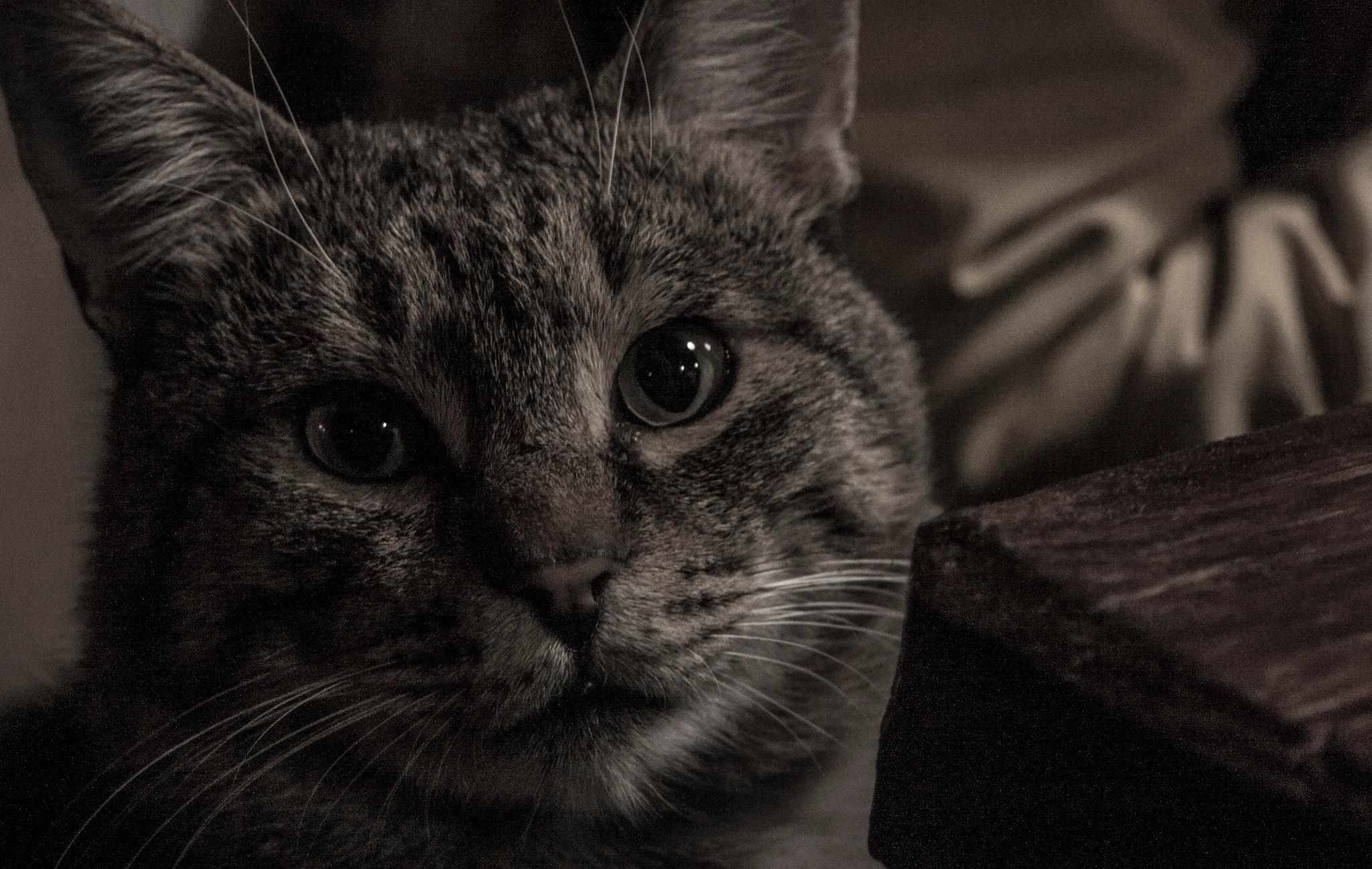 Heavy cat life by egorsha