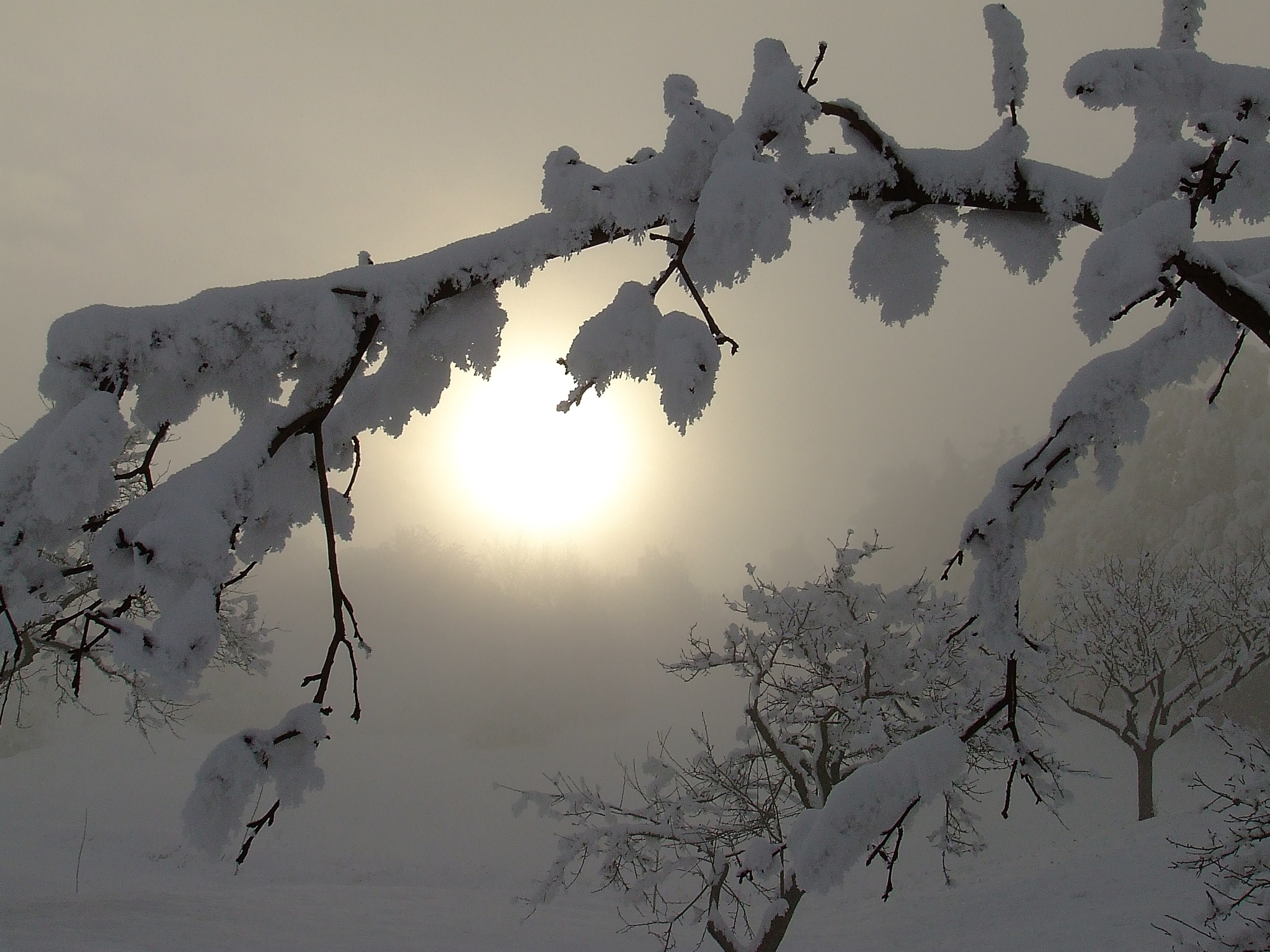 Light by Donica Gatea