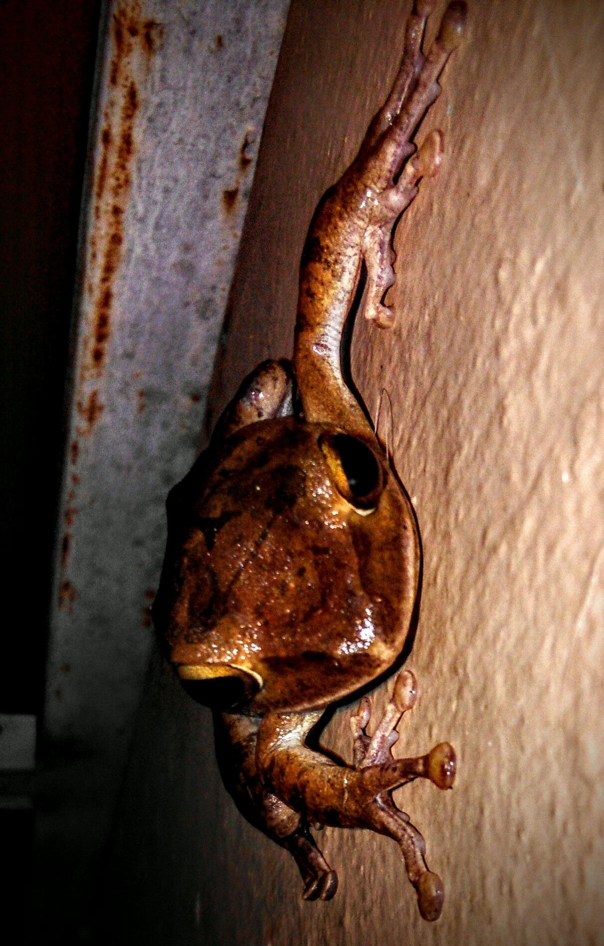 Frog by Wongphakdee