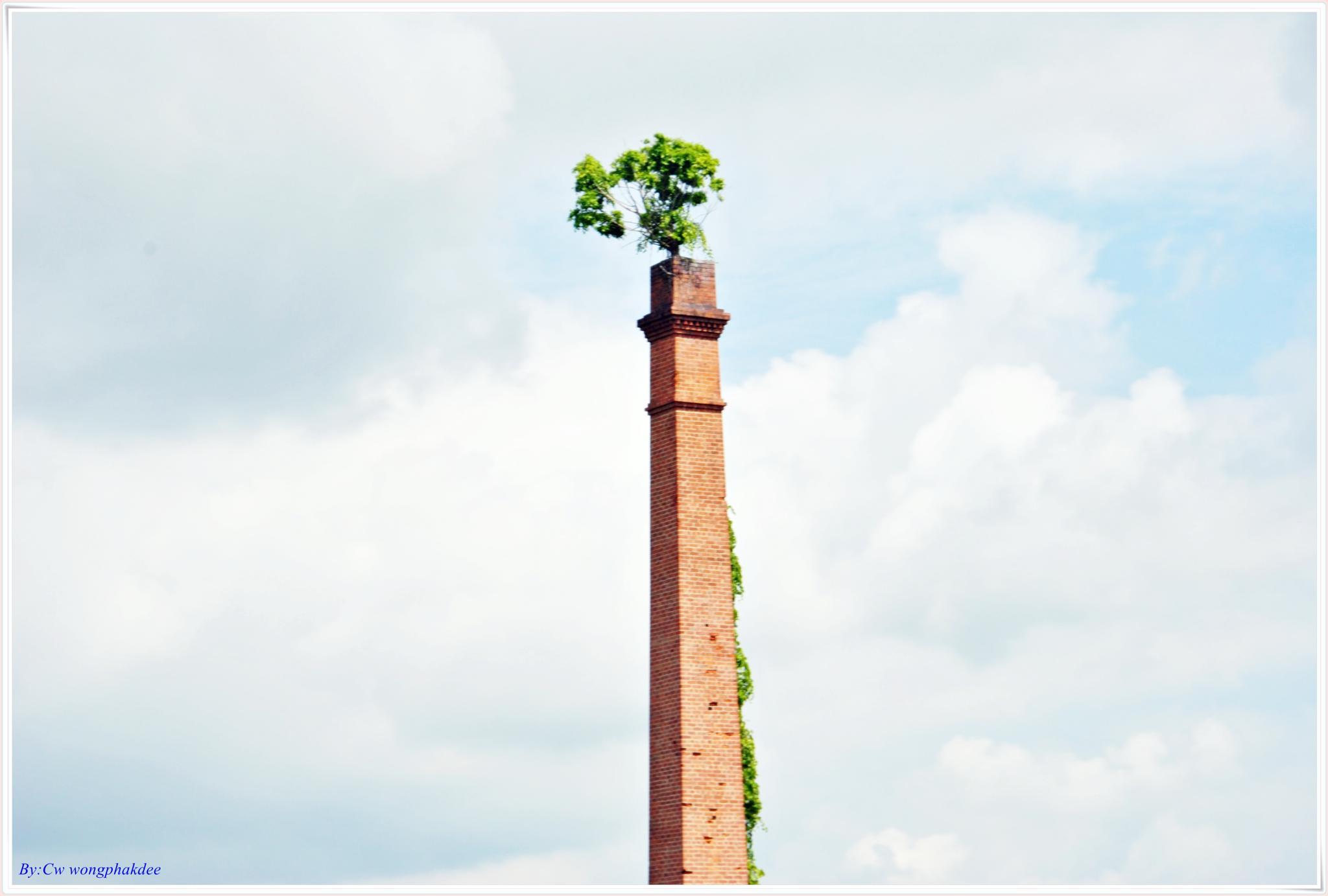 Chimney tree by Wongphakdee