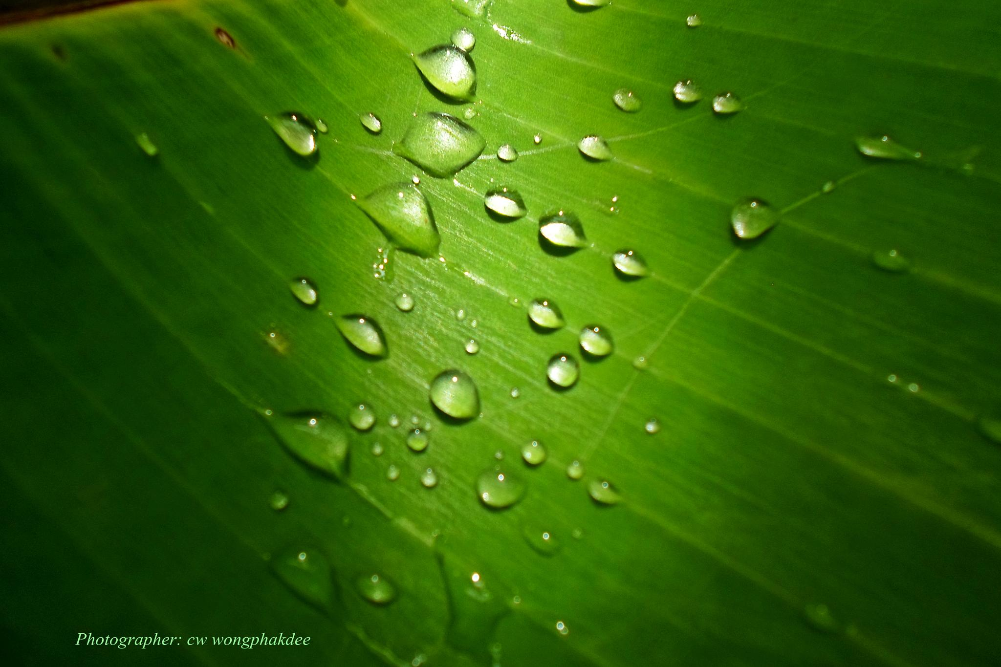 Drops on the leaf by Wongphakdee