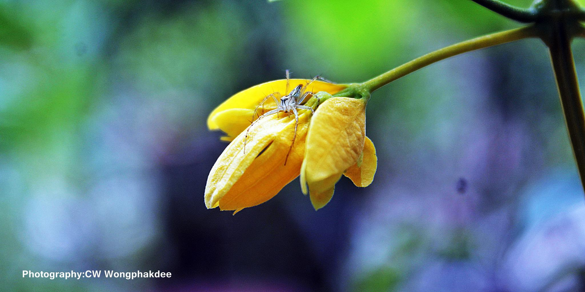 Photo in Nature #flower #spider #nature #macro