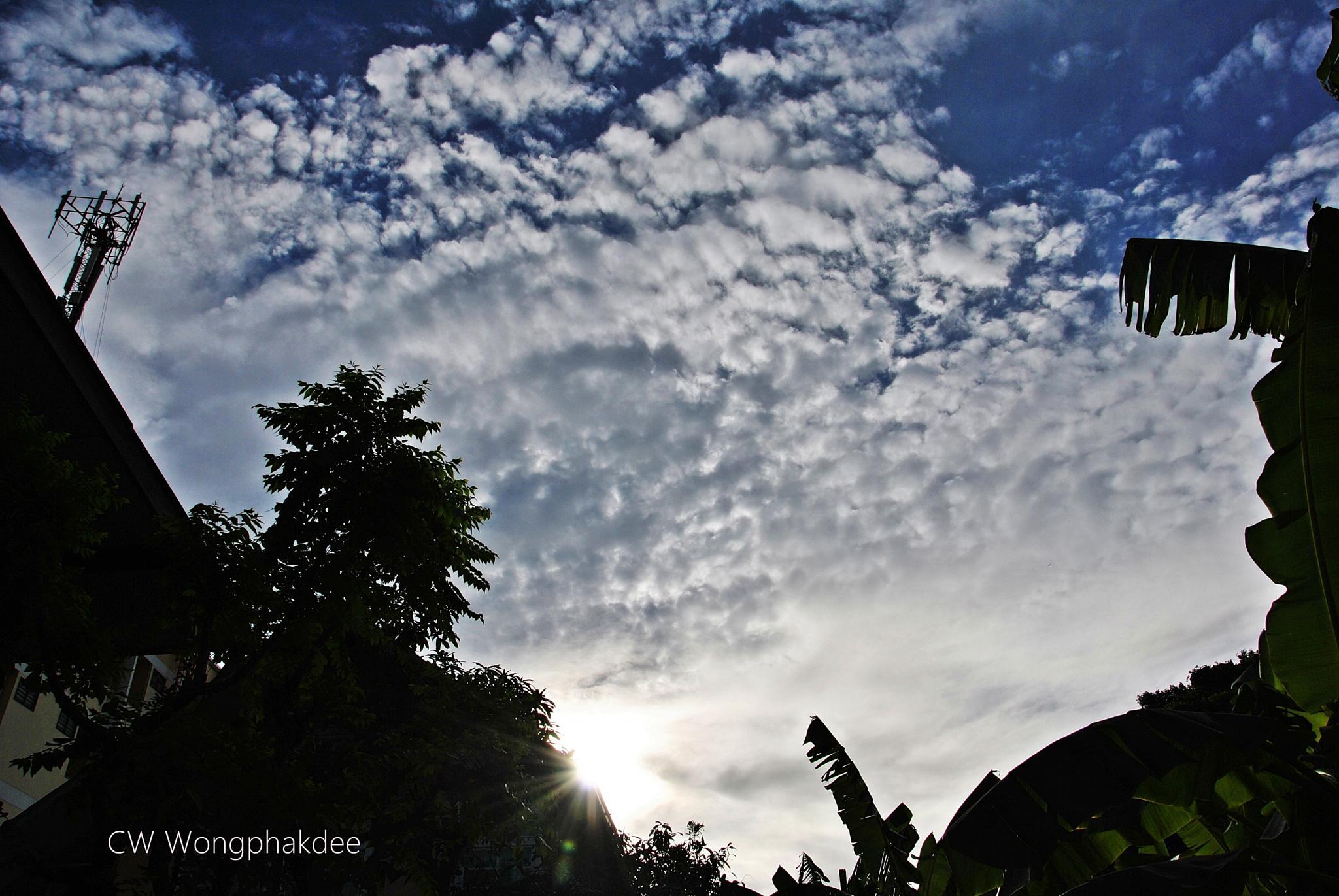 Morning by Wongphakdee