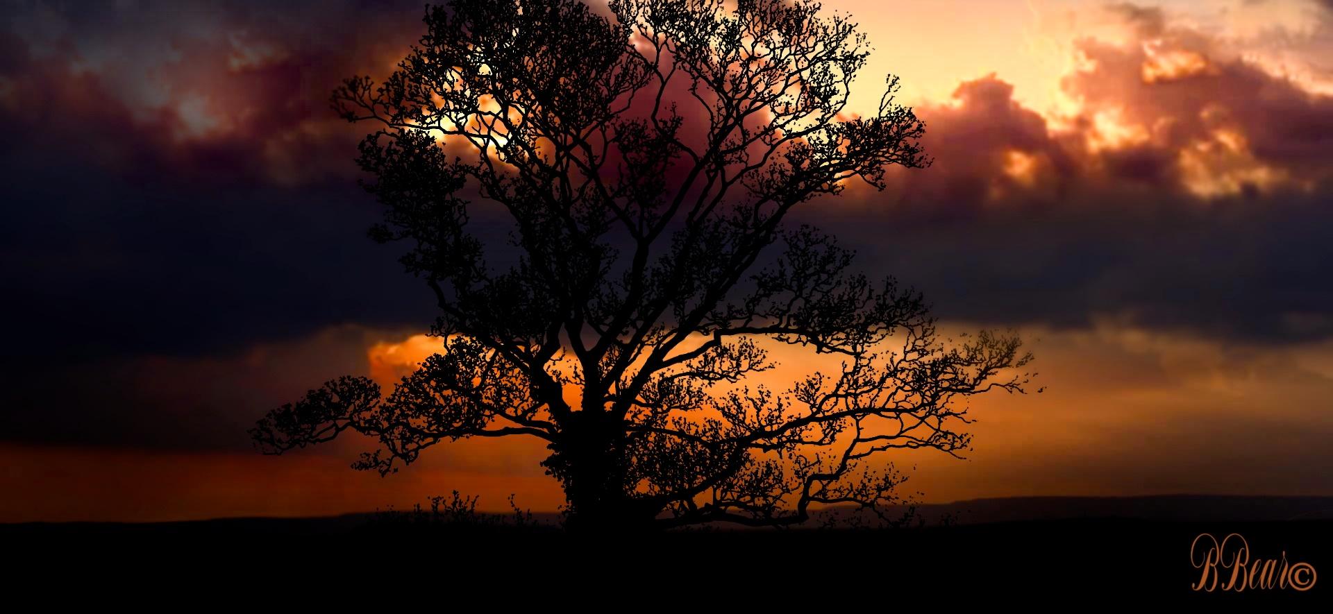 LONELY TREE by BARNEYBEAR