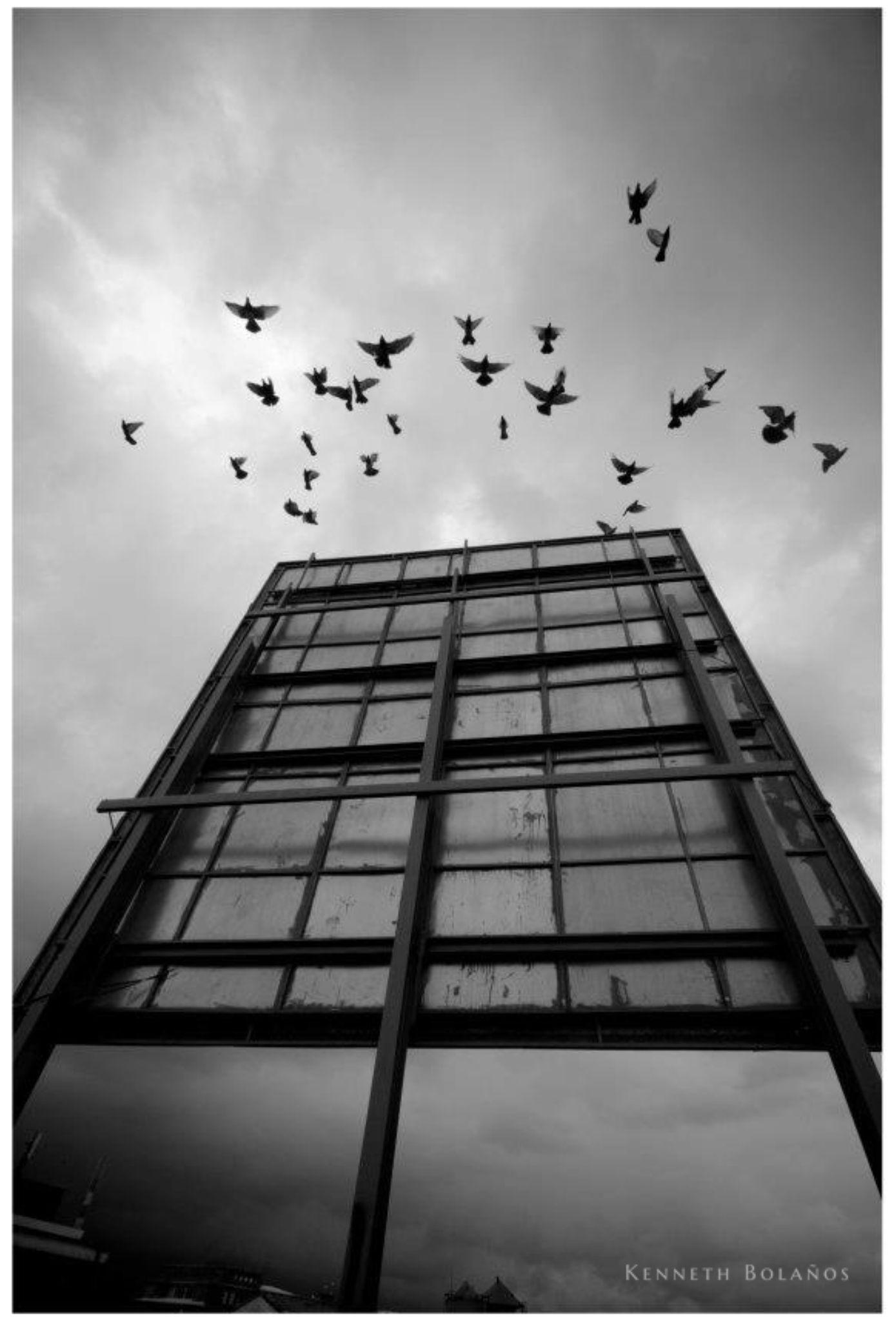 Fly by Kenneth Bolaños Bogantes