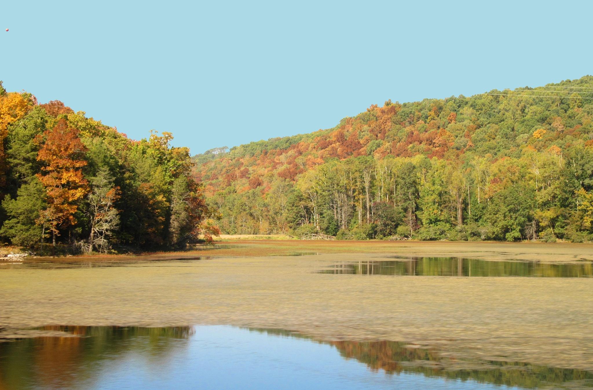 Goose Pond in Autumn by LizWilliamsOriginals