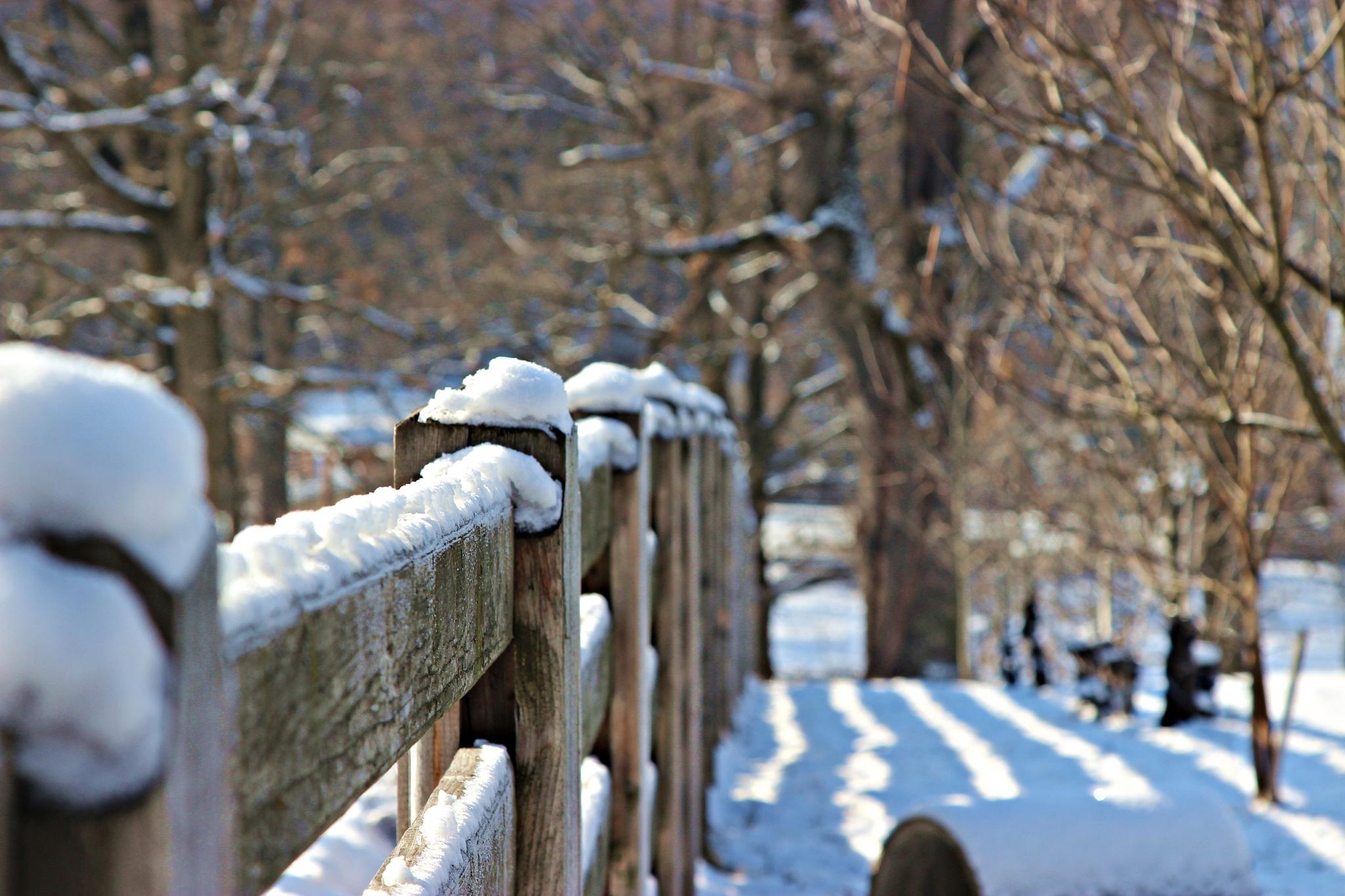 snow by Zeev Liviu Zigner