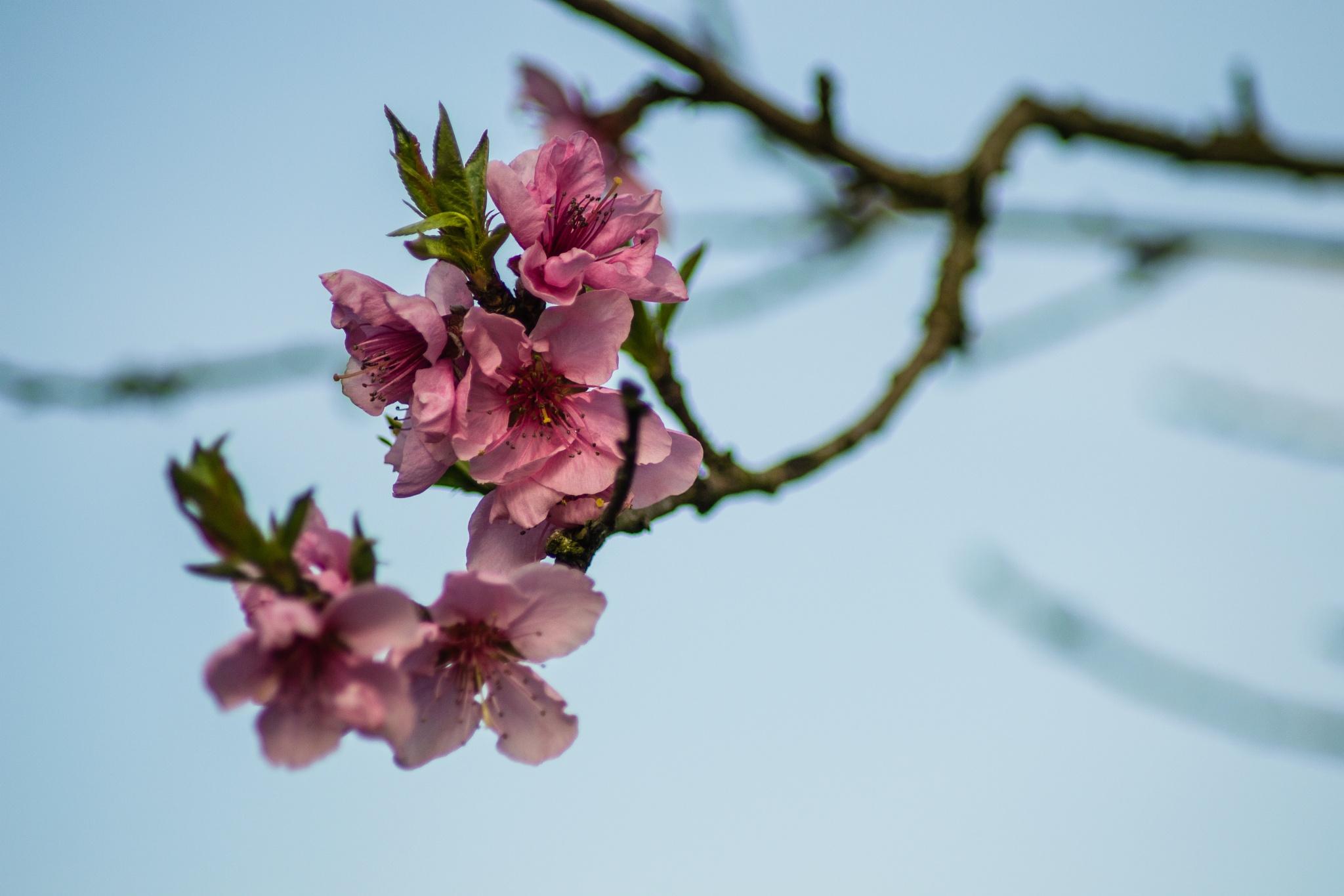 Flowers by kerber