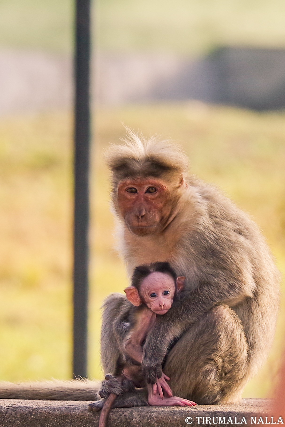 Mother's care by Tirumala Nalla