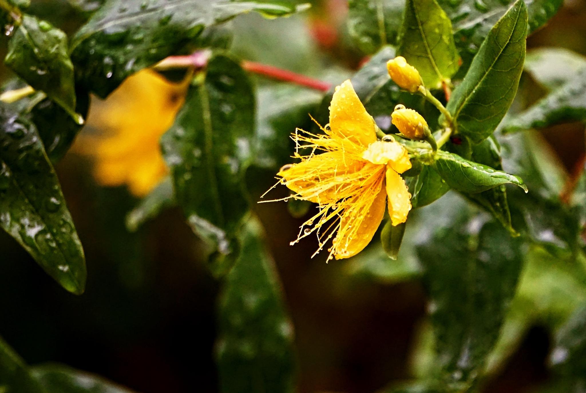 Sous la pluie... by Francesco Abate