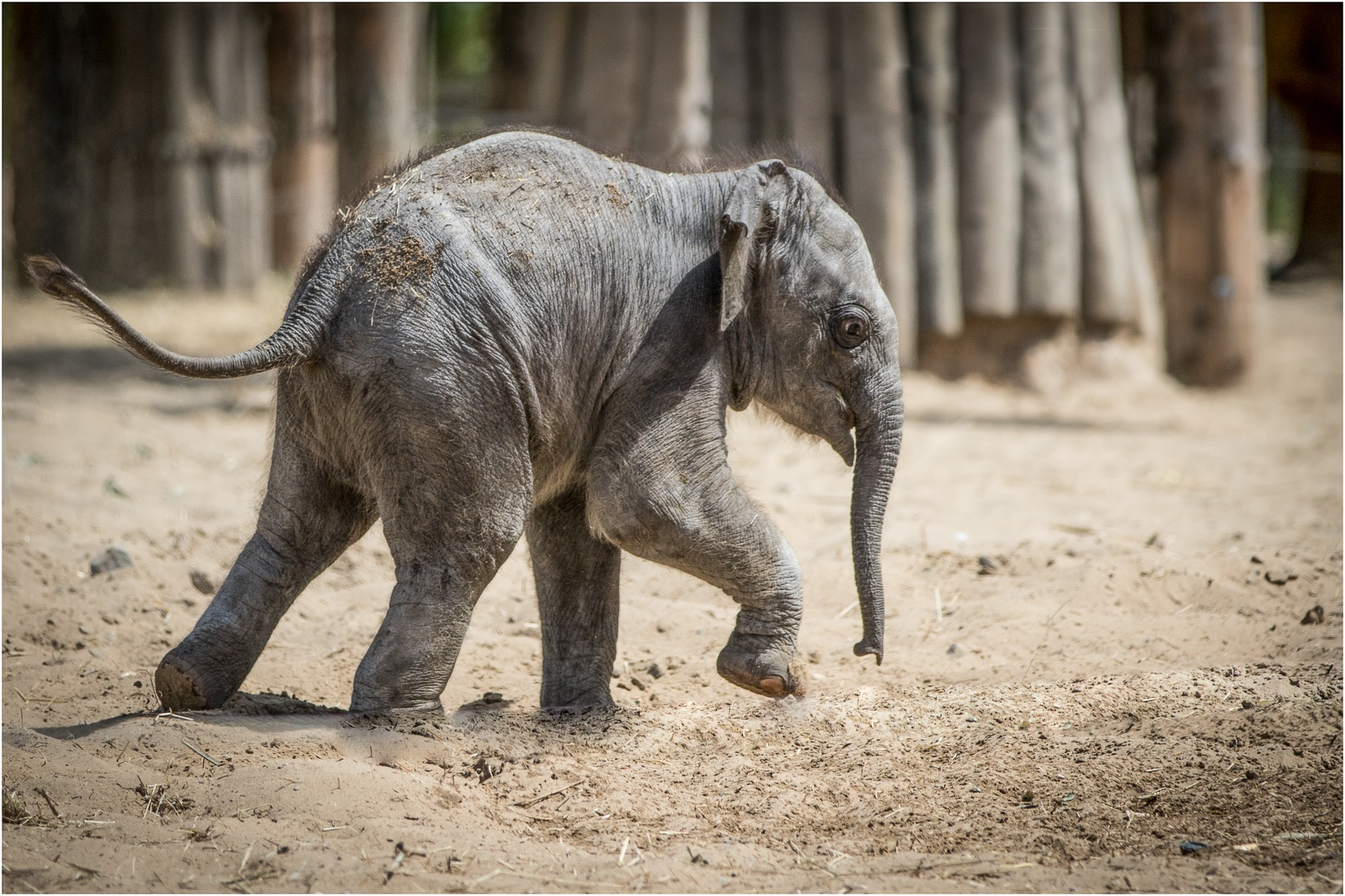 baby elephant by Els Blomme