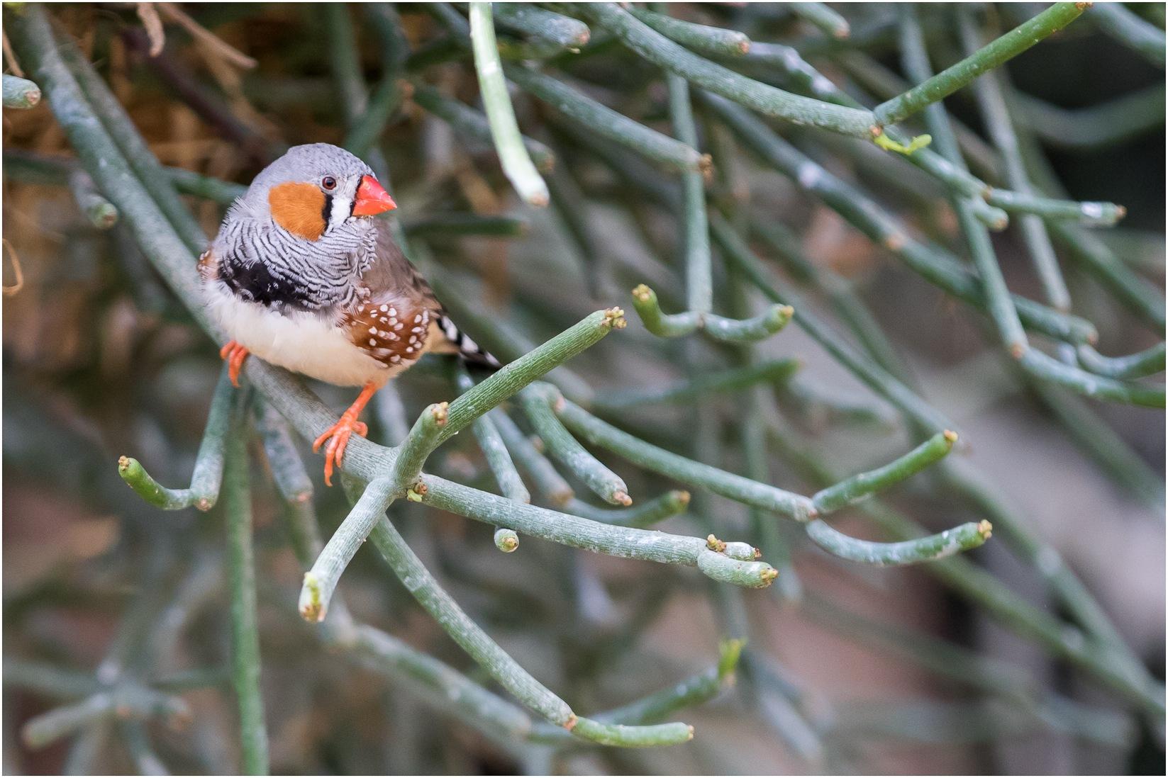 little bird by Els Blomme