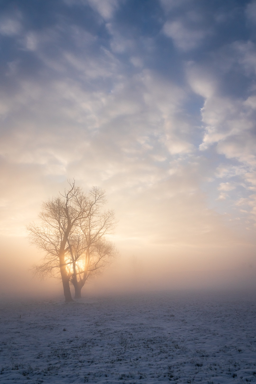 snow, fog and sunrise  by Els Blomme