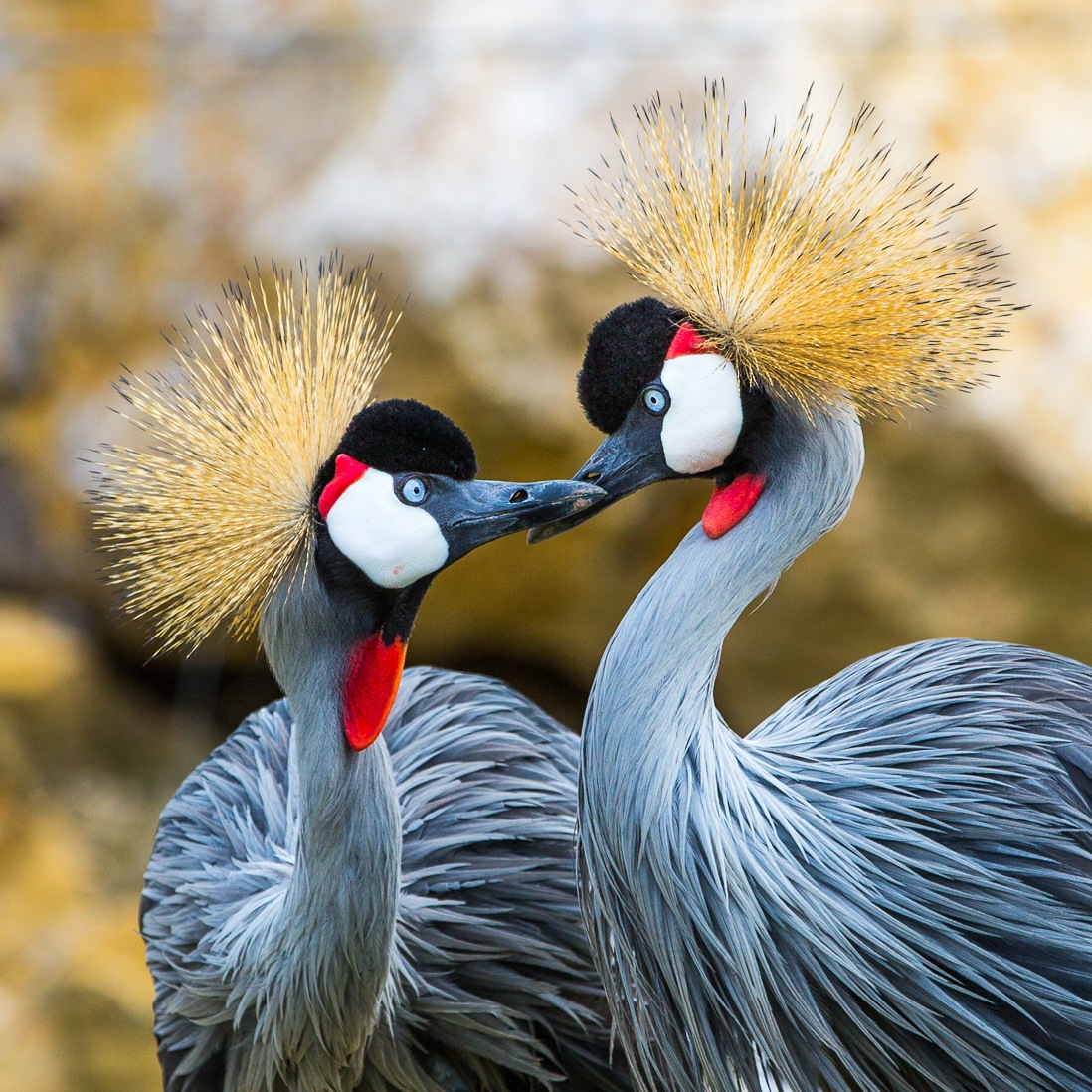 crown birds by Els Blomme