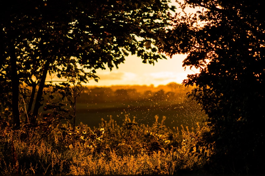 Evening Glow by Pointnclick67