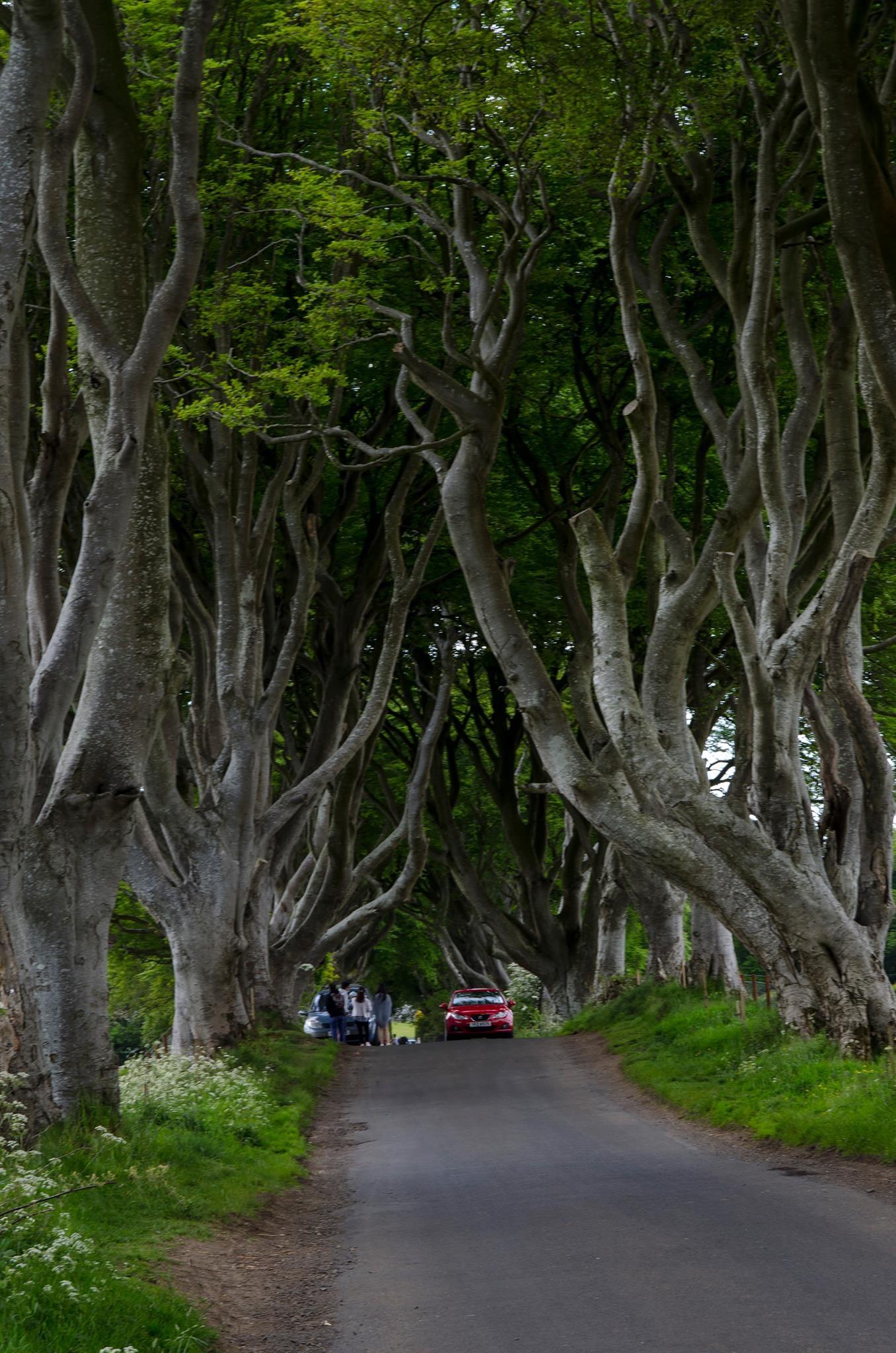 The Dark Hedges, N. Ireland by Jerbear
