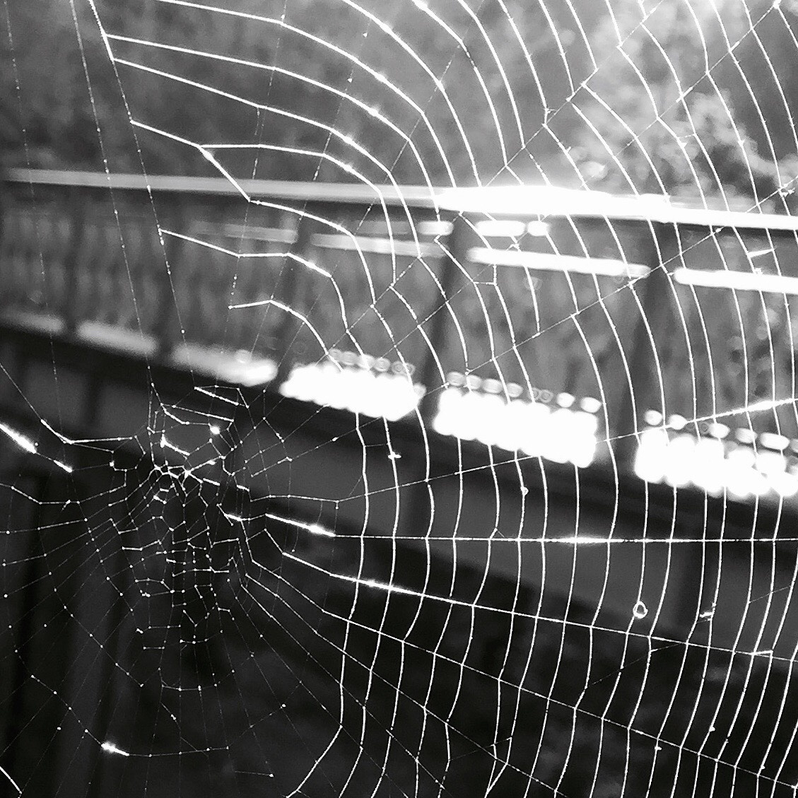 Web of life by Mee Mee