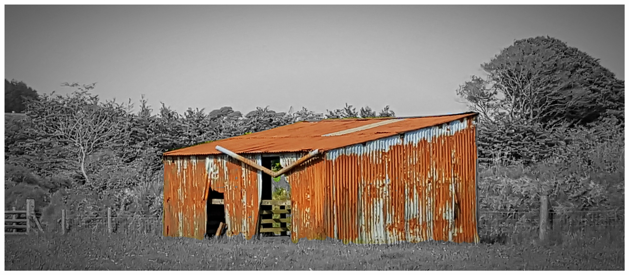 Red Shed  by Yvonne Lewis